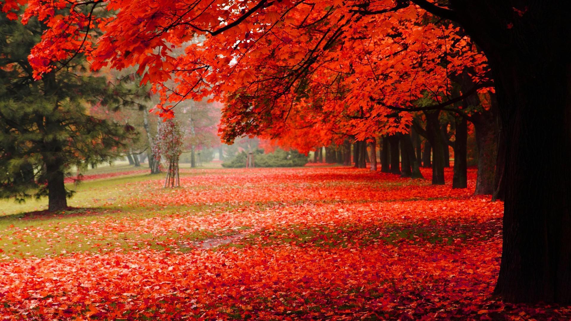 Autumn Road HD Wallpapers. Beautiful Autumn Desktop Backggrounds