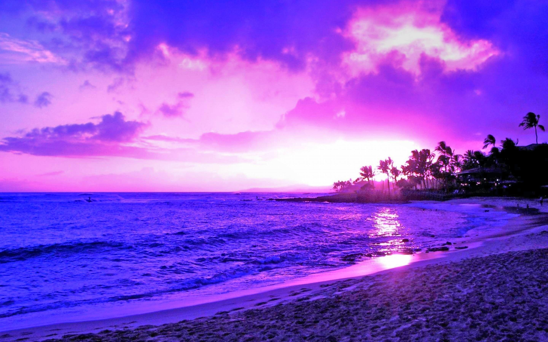Earth – Scenic Twilight Sunset Palm Tree Tropical Horizon Wallpaper