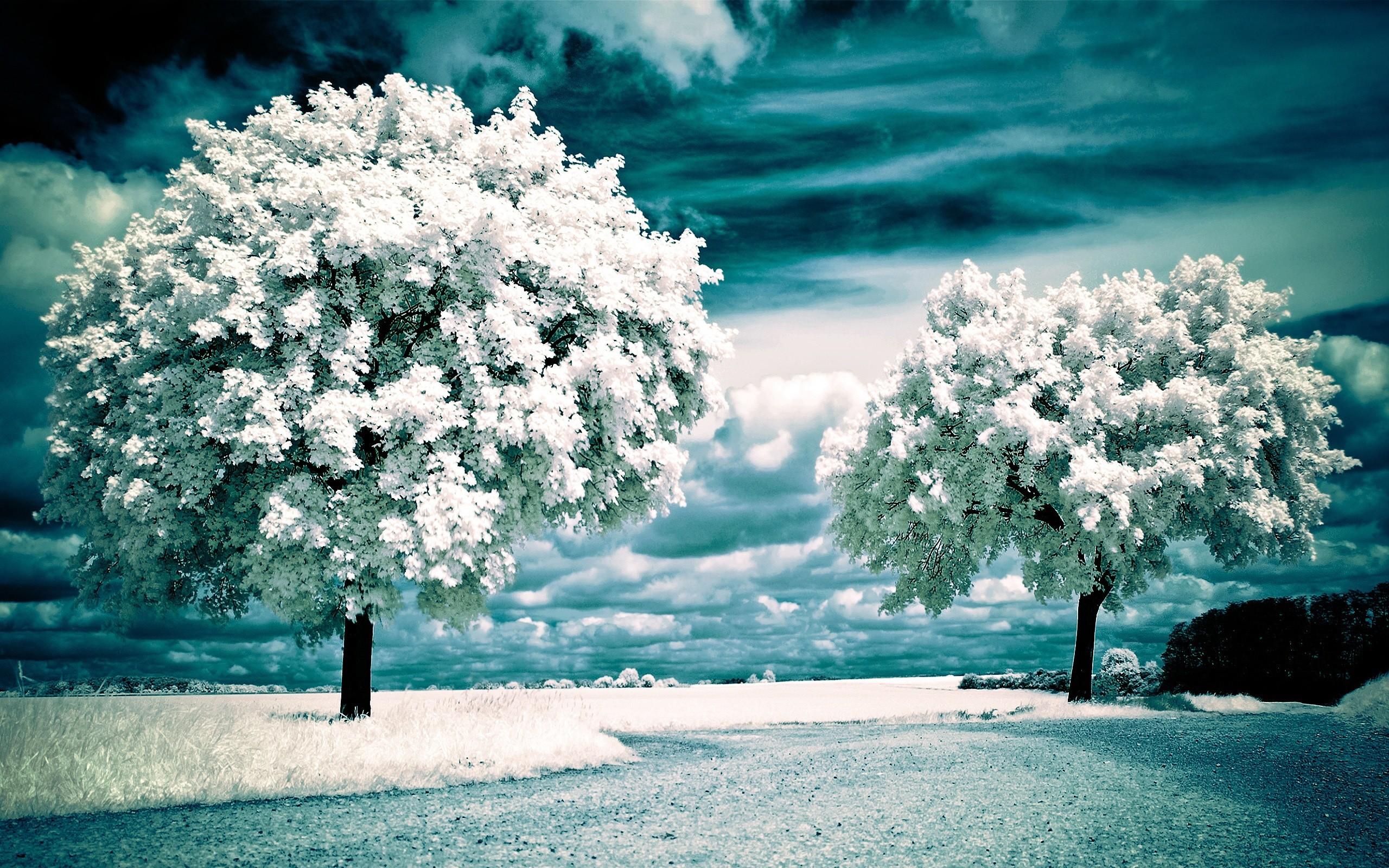 Earth – Scenic Snow Winter Wallpaper