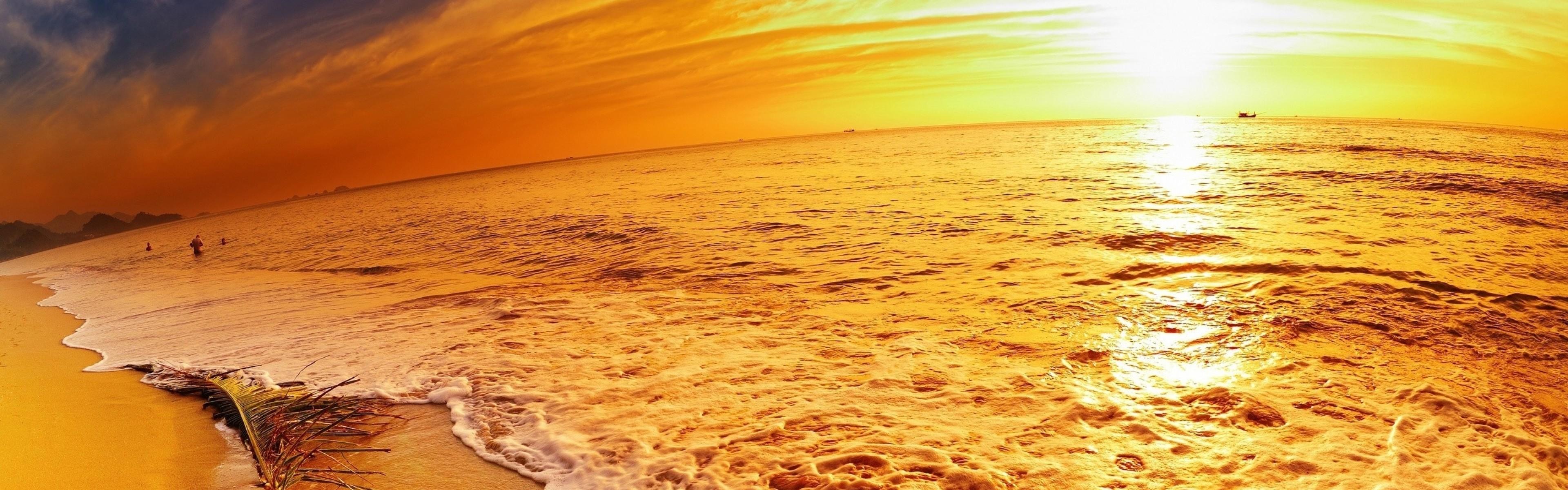 Wallpaper coast, sea, decline, branch, palm tree, sand, beach