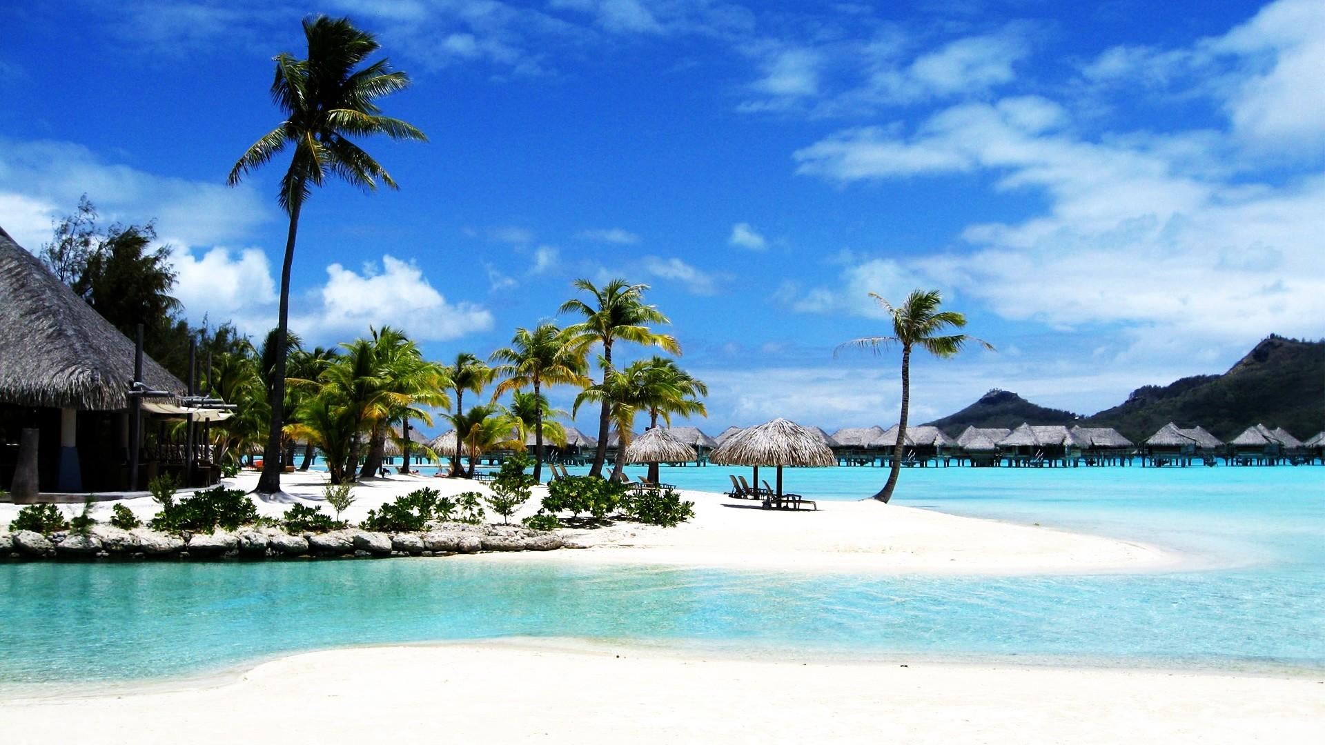 Palm Trees on Bora Bora Beach