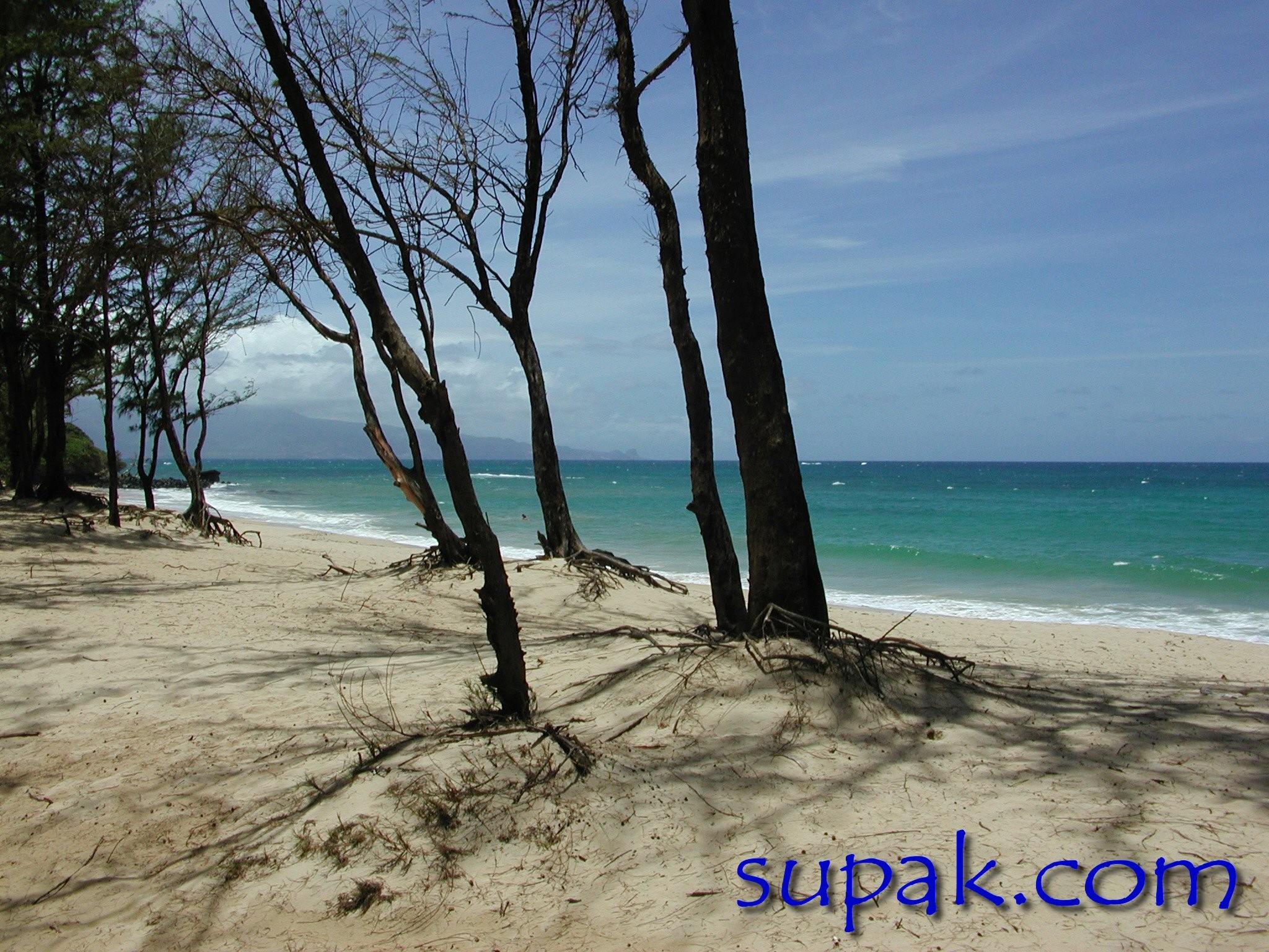 … beach photograph Hawaii photography huge …