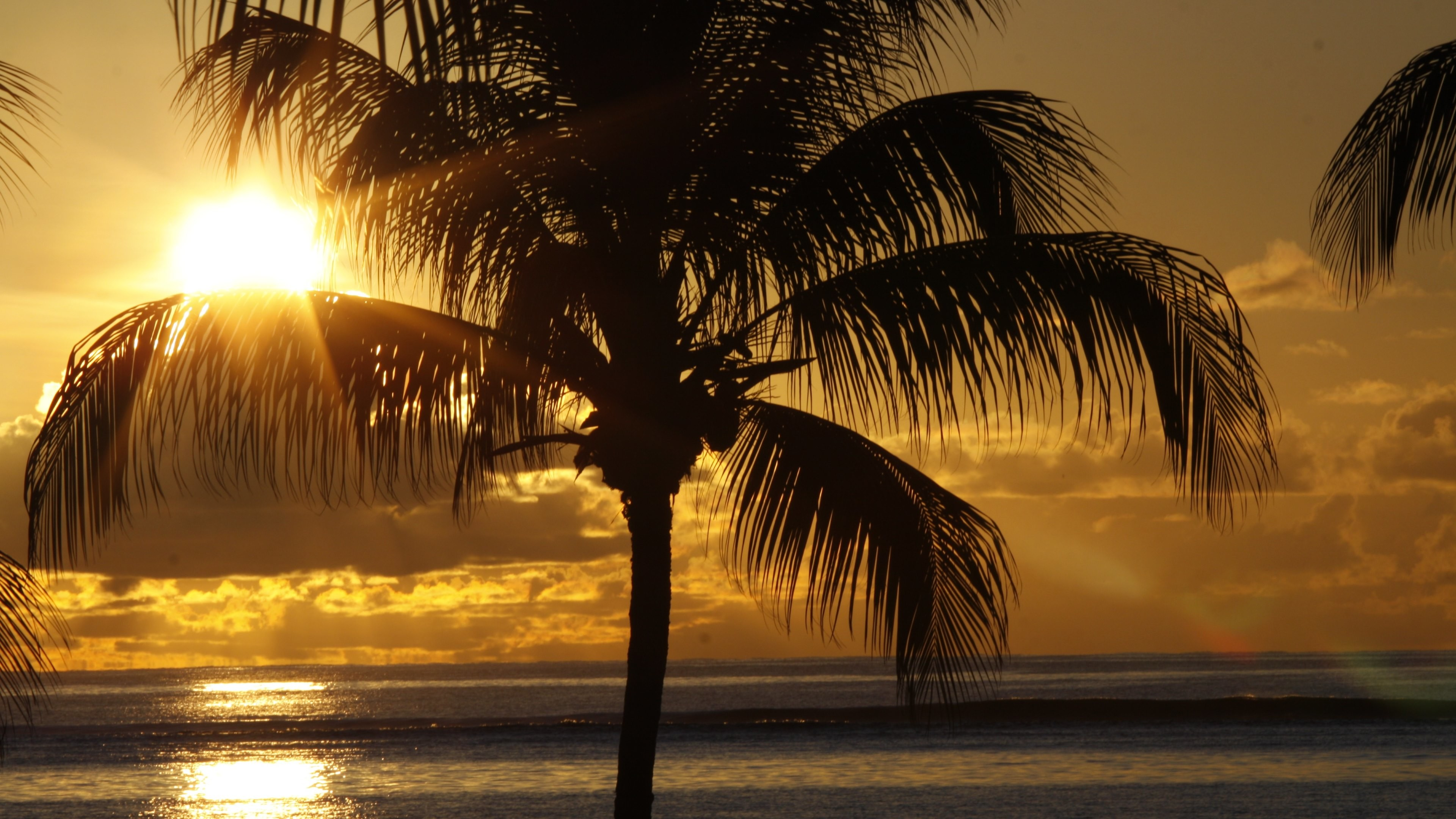 Wallpaper: Sunset and palm on tropical beach