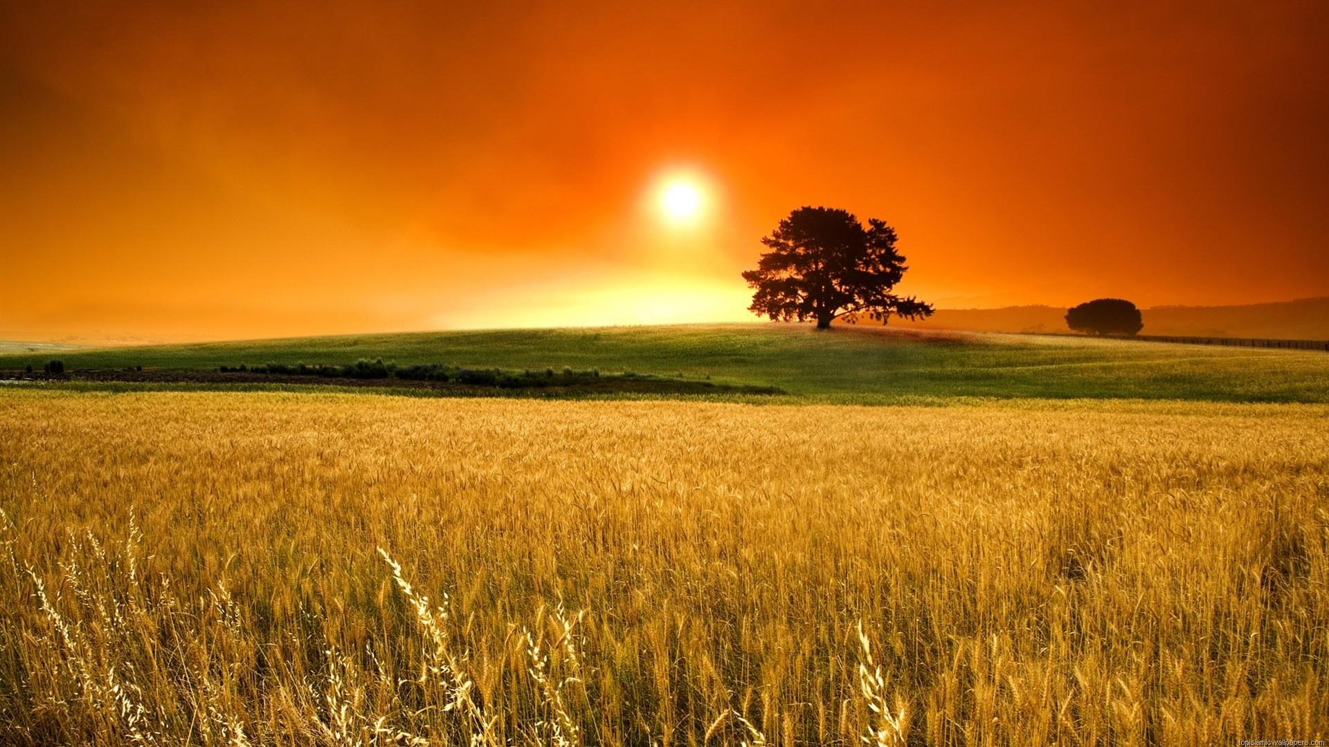 Beautiful Sunrise HD Wallpaper from Field :: HD Sunrise Wallpaper