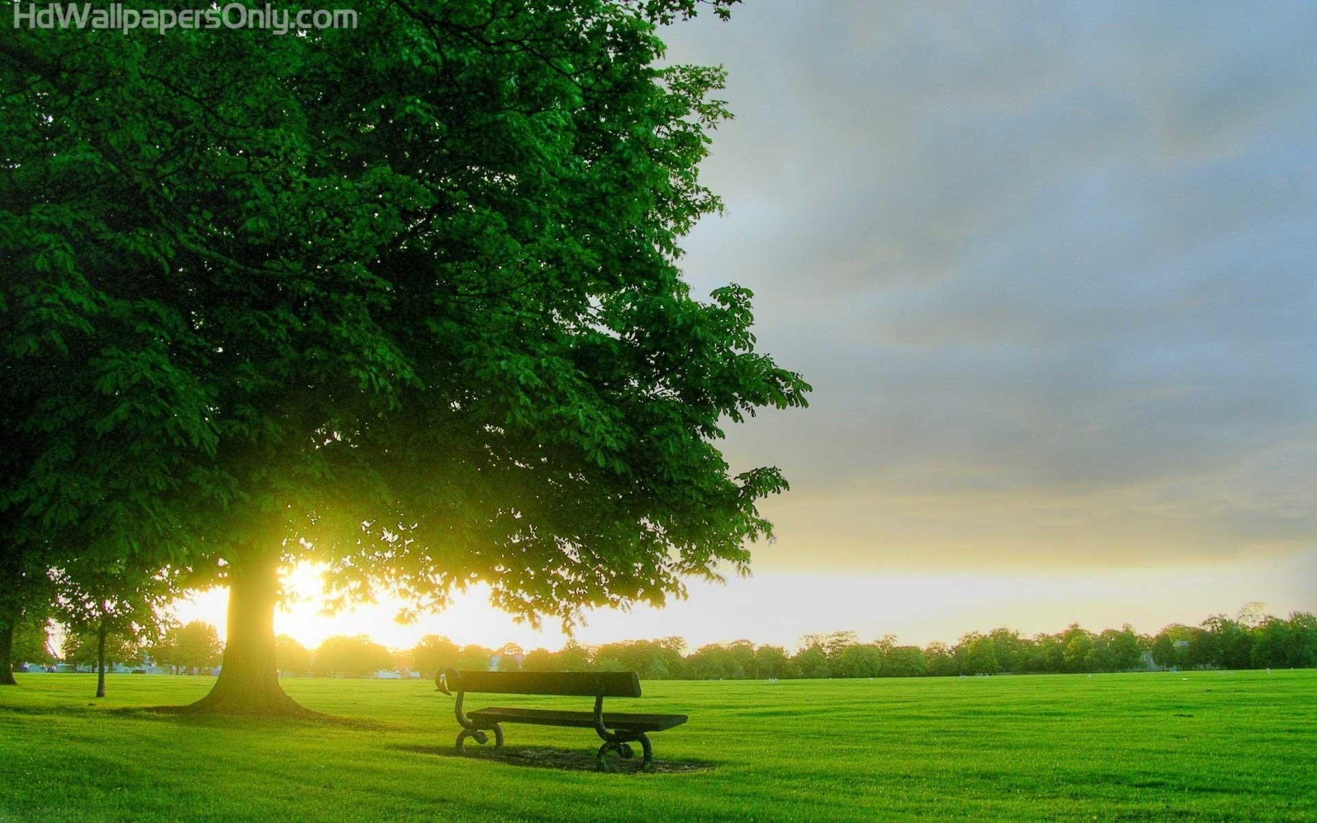 Morning Flowers Beautiful Sunrise Wallpaper HD Download