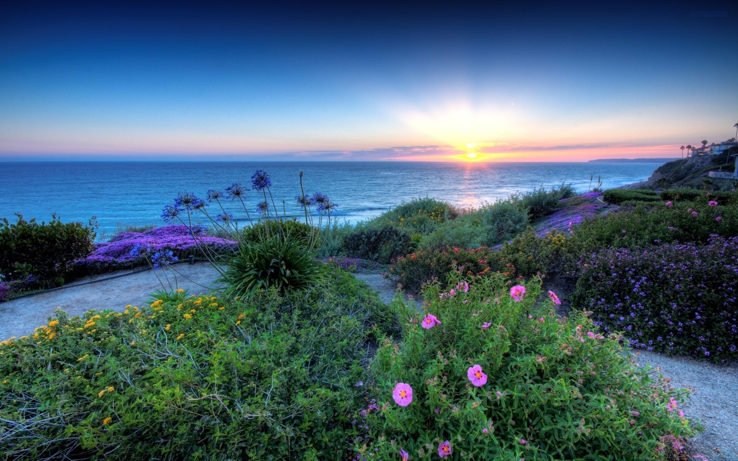 Flowers Beautiful Nature Blue Beach Sunrise Ocean Sky Sunshine Sunset  Wallpaper Tablet