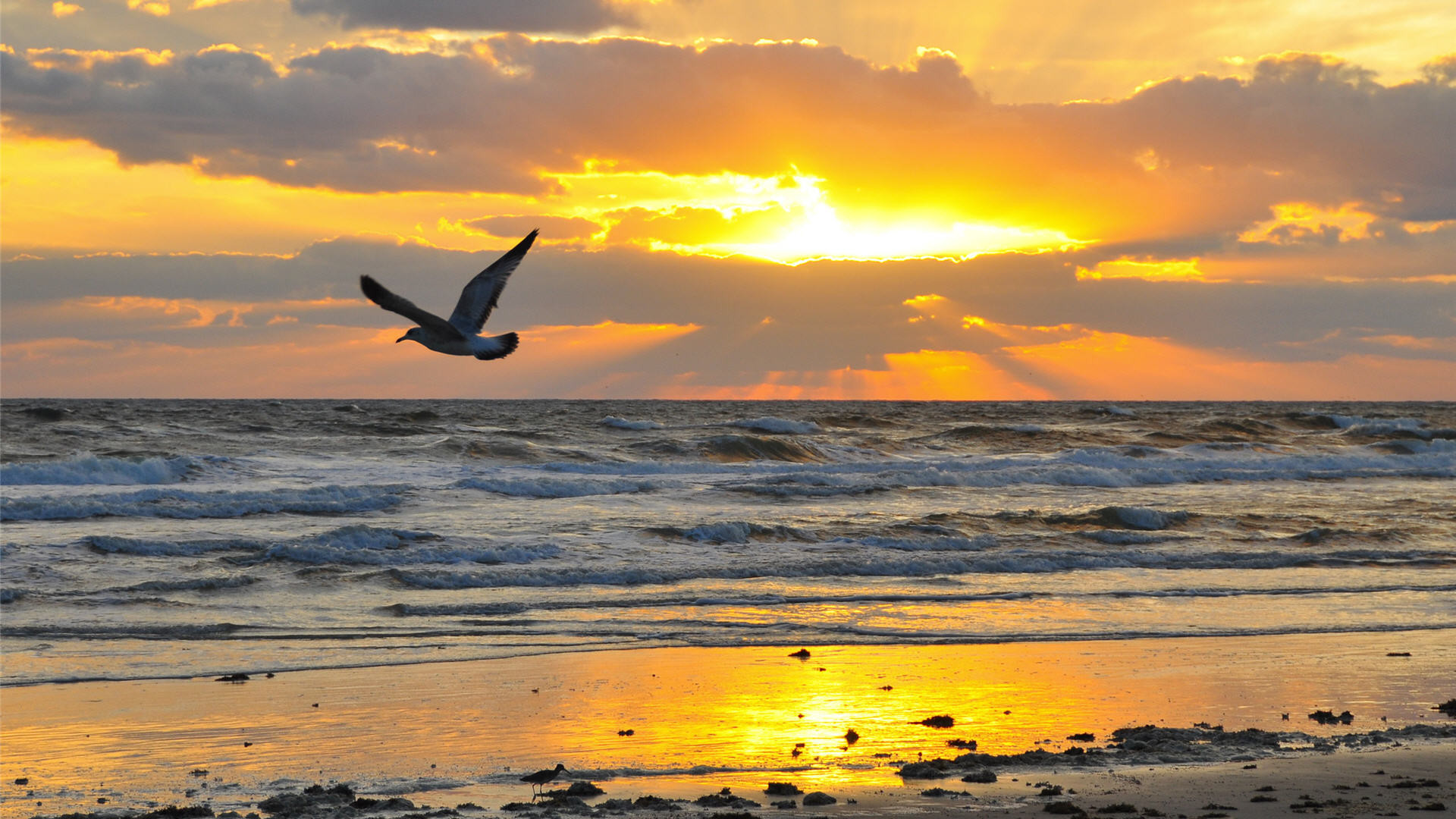 Two pelicans sit on a sign in the water for a beautiful ocean sunrise in  Daytona Beach, Florida. Early morning on the beach is a great time to visit  to see …