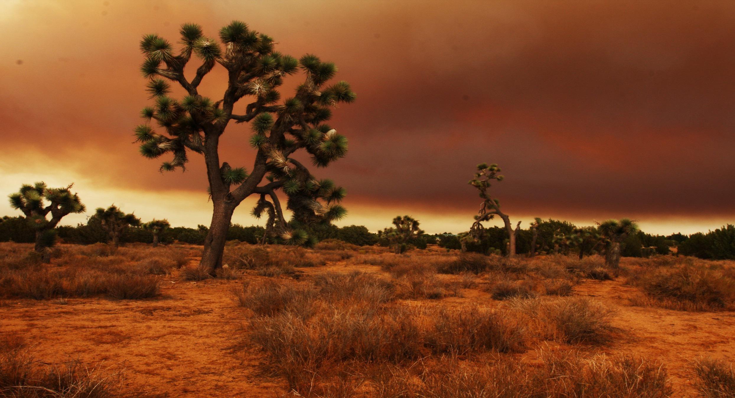 Mojave desert over the boundries of california nevada arizona utah .