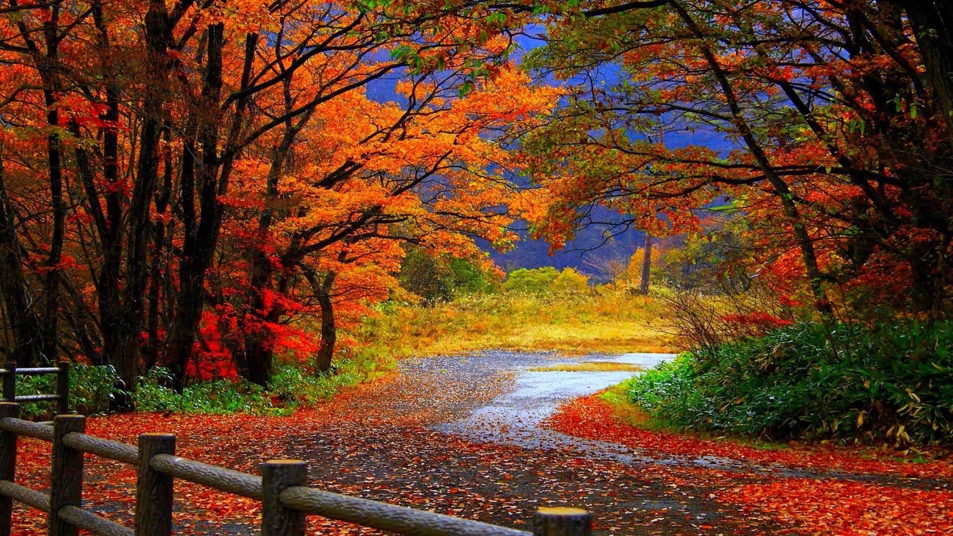 Fall Scene HD Wallpapers – HD Wallpapers Inn