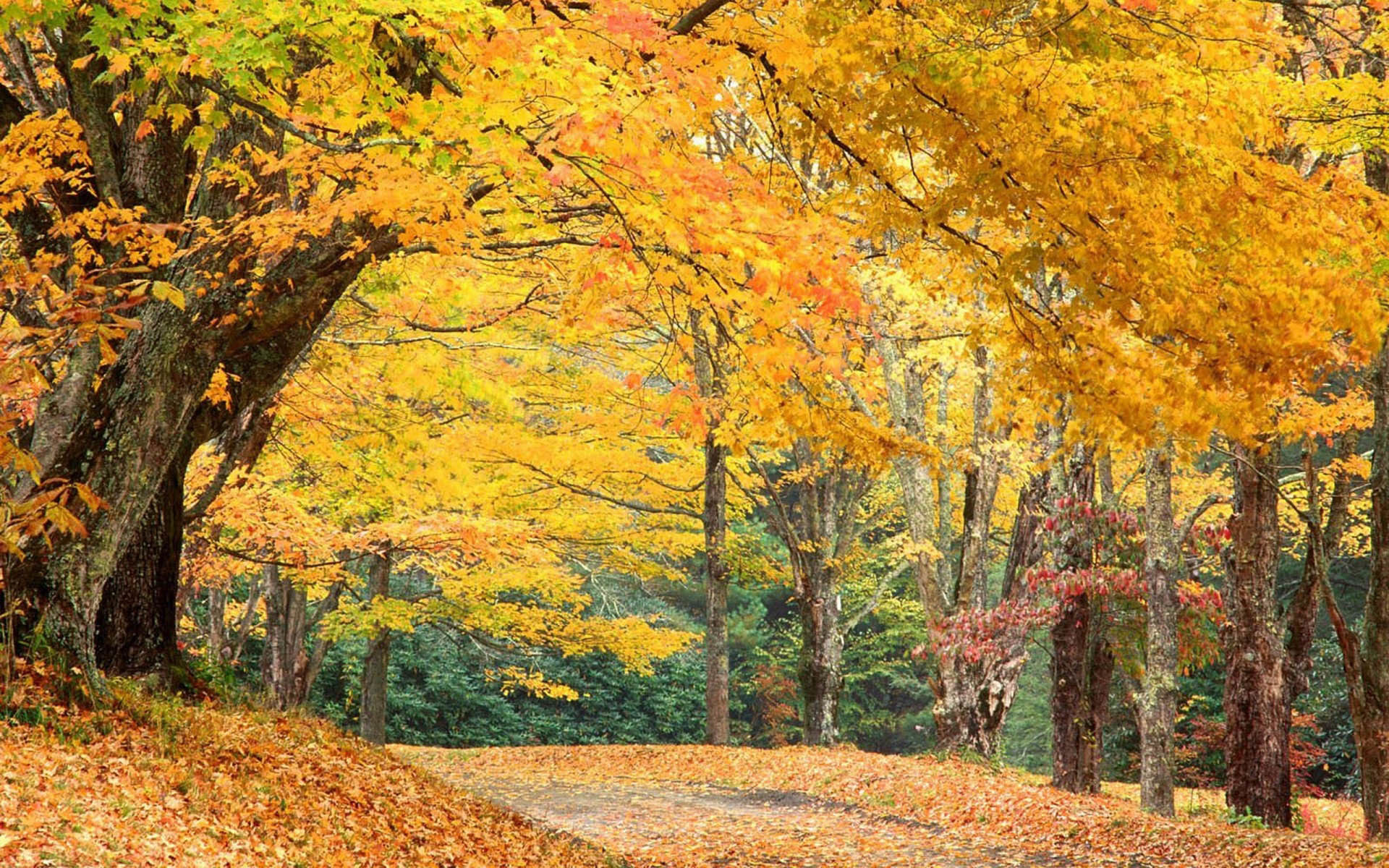 Autumn Scenes Wallpapers, Wallpapers & Pictures .
