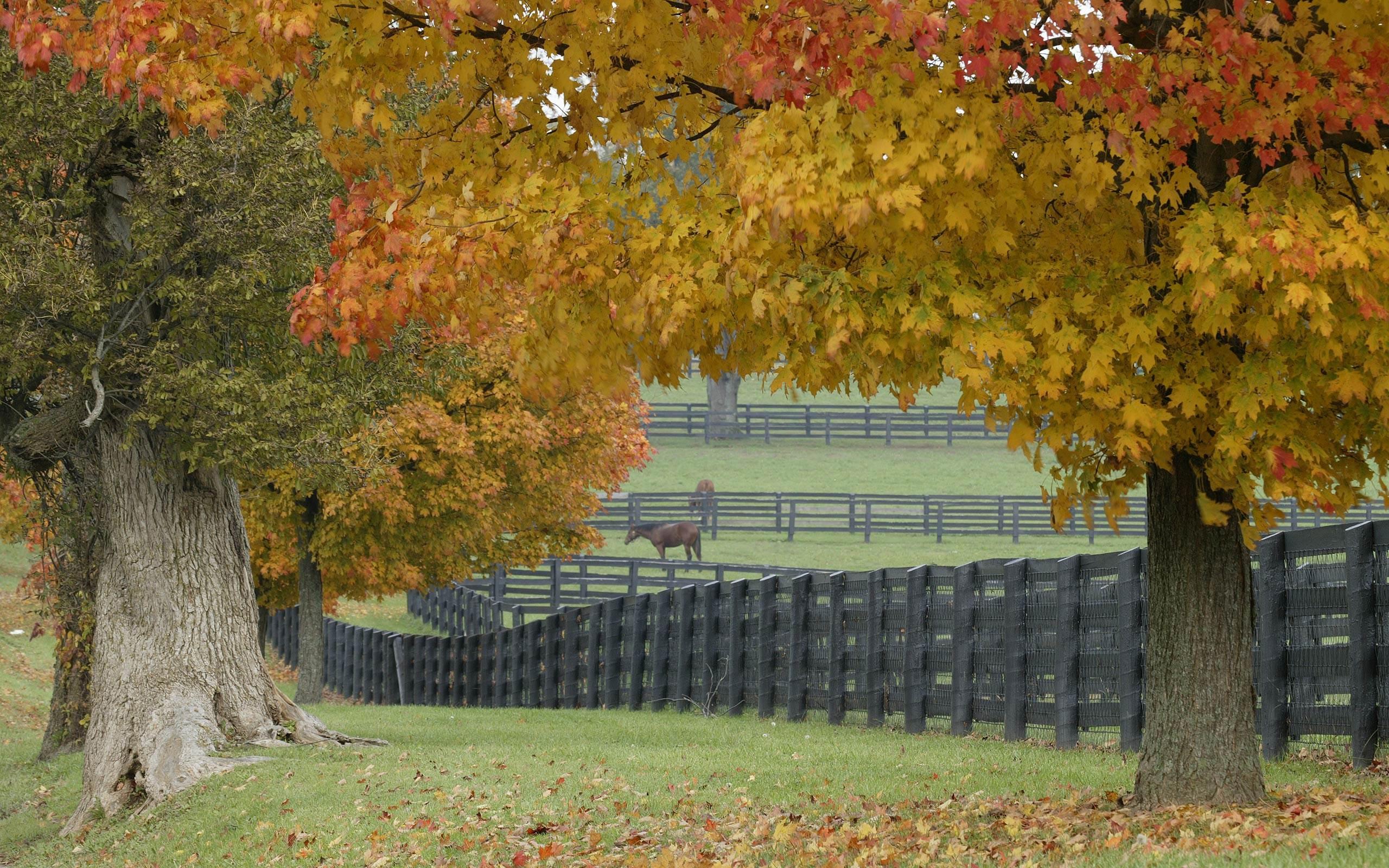 Fence Wallpapers   Desktop Wallpapers