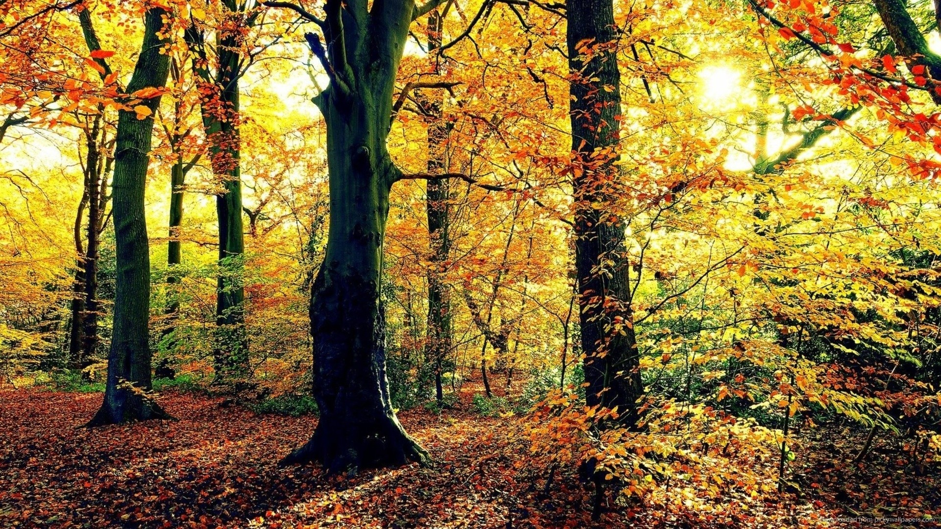 End of Autumn for 1920×1080. SubmitHow to use Picky Wallpapers …