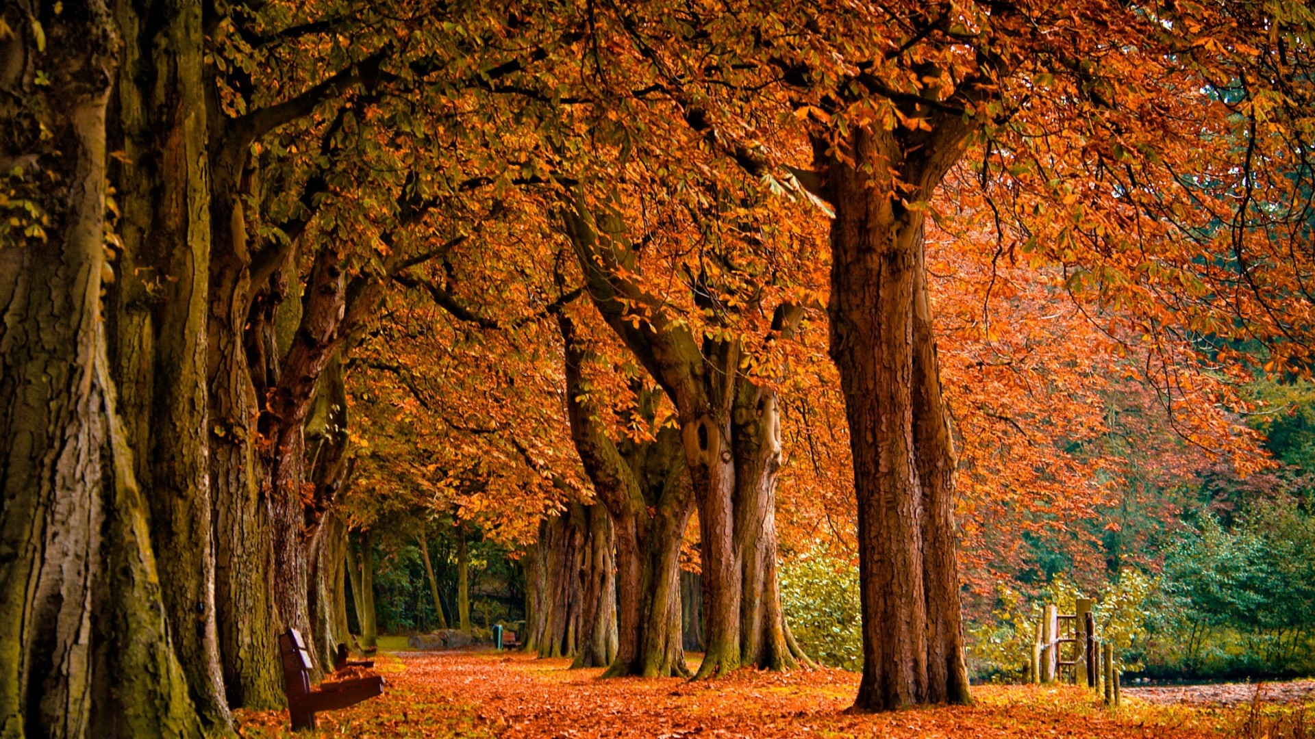 Fall Desktop Backgrounds Free Download Photo.