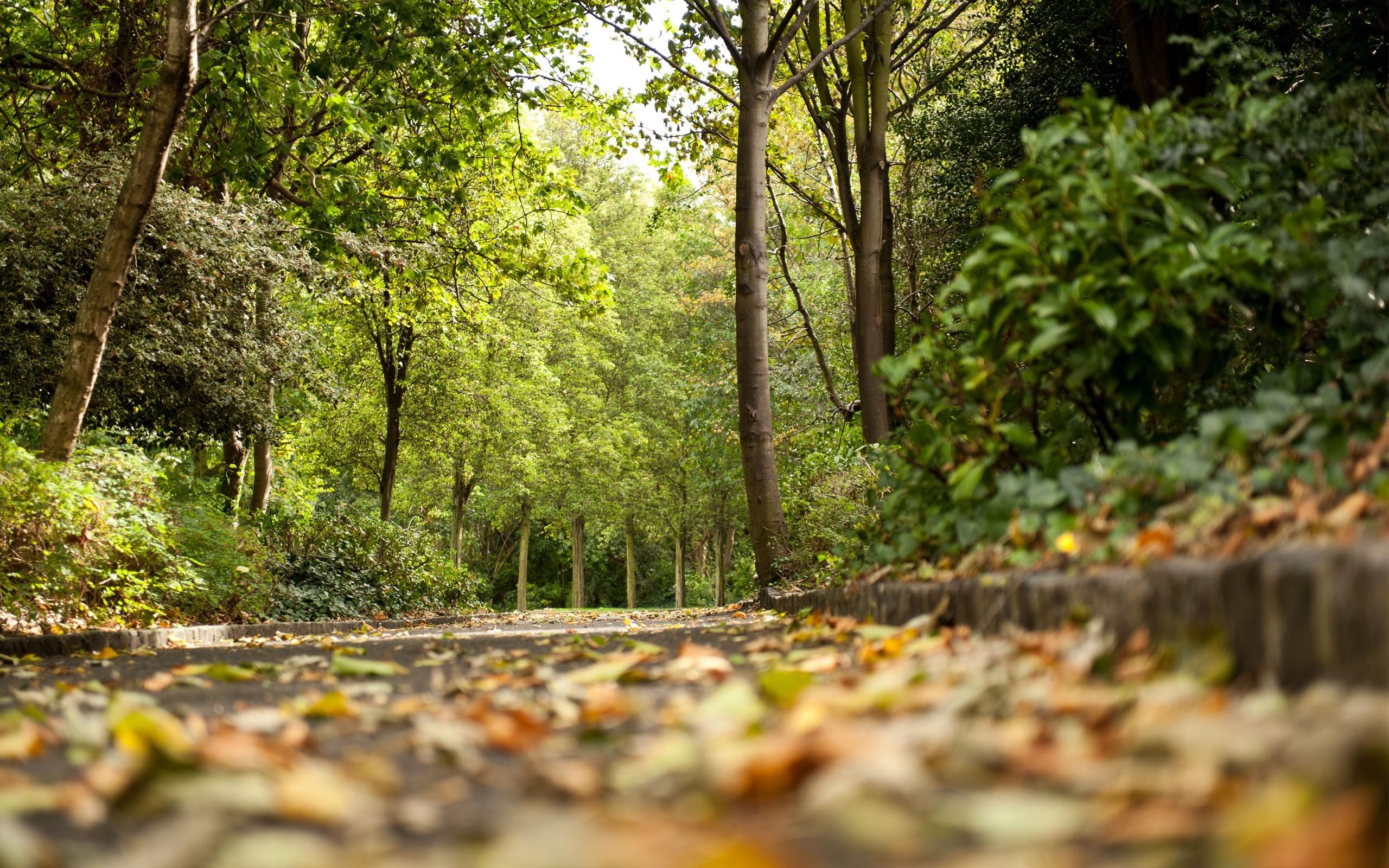 seasons-autumn-scene-in-germany-backgrounds-wallpapers.jpg