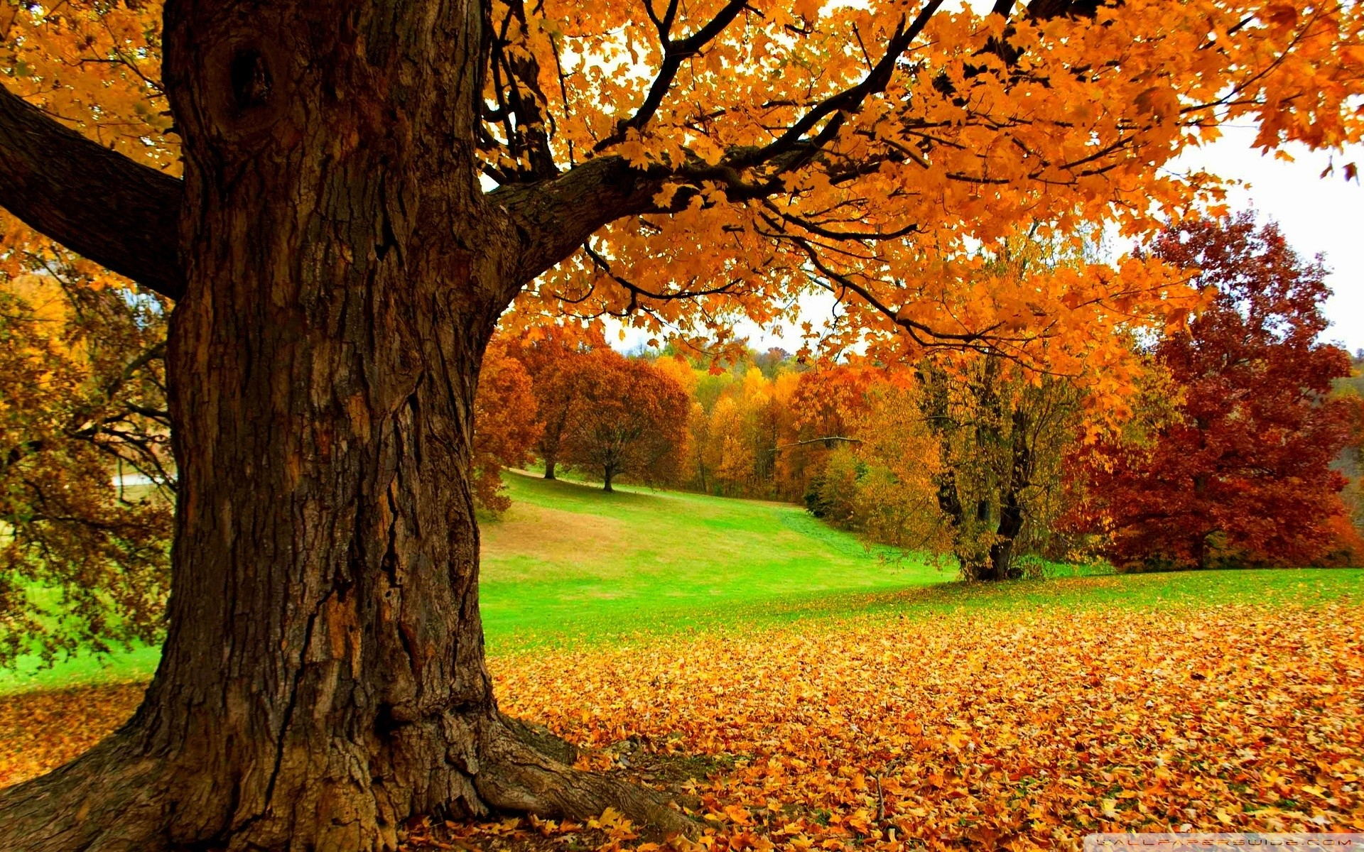 Spectacular autumn scene – HD wallpaper download. Wallpapers, pictures .