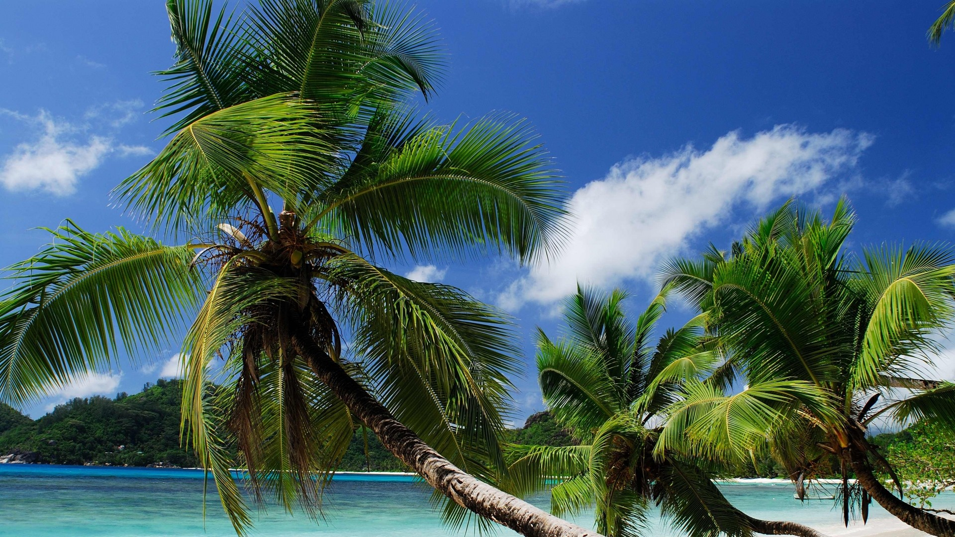 Wallpaper beach, tropics, sea, sand, palm trees, sandy