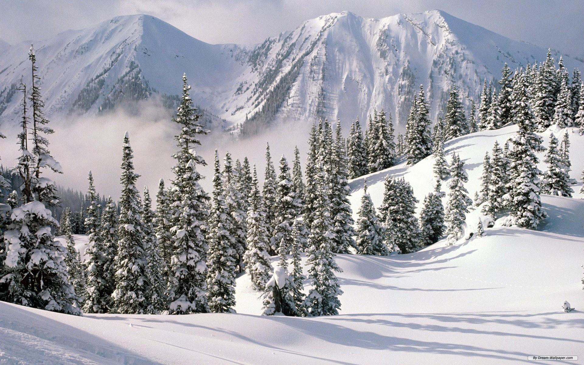 Free Amazing Winter Wonderland Wallpaper