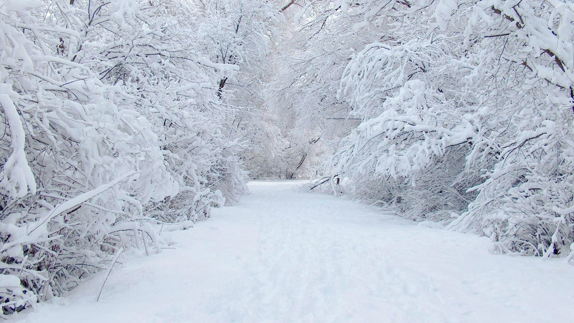 Winter Snow Wallpaper 1920×1200 Winter Snow Wallpapers (34 Wallpapers) |  Adorable Wallpapers