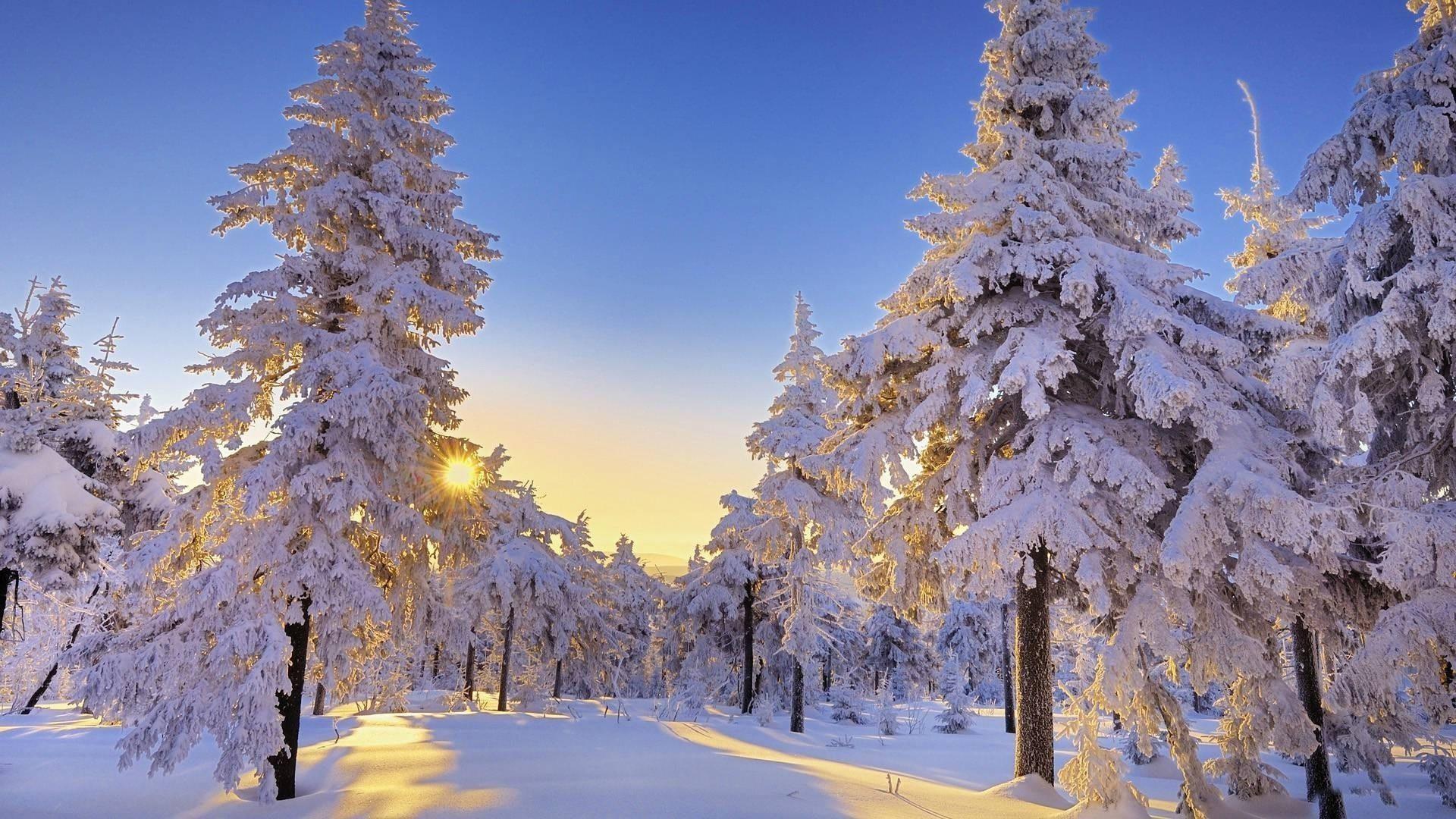 Beautiful winter sun wallpaper desktop.