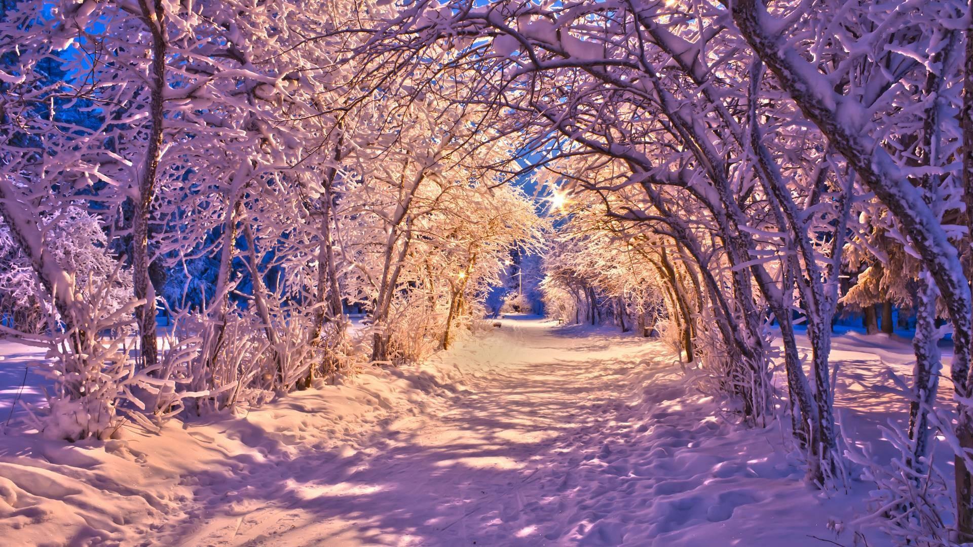 Amazing Snowed Forest Winter Wallpaper, iPhone Wallpaper, Facebook .