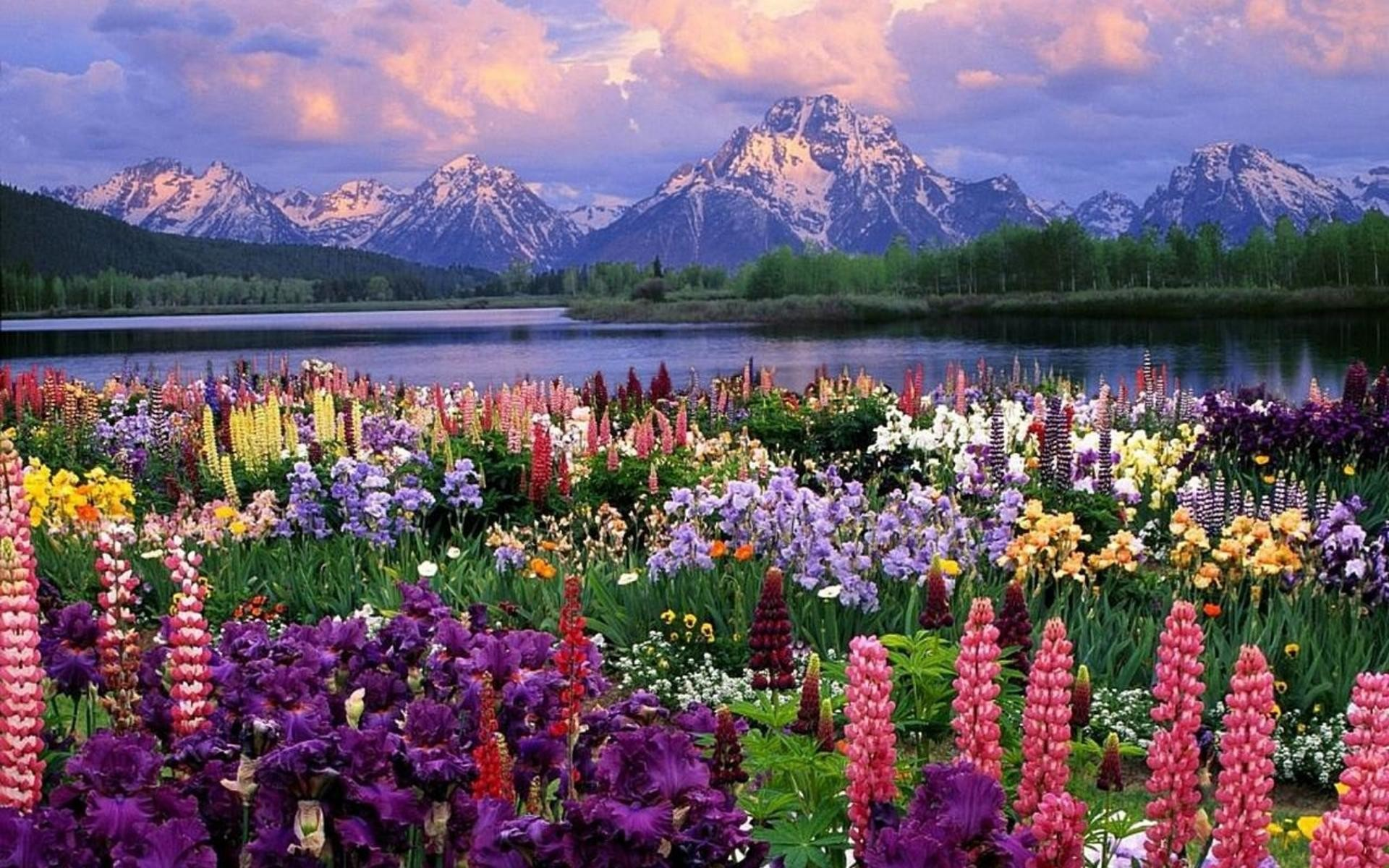 Spring Landscape Hd Wallpaper Spring Multi Colors Wallpaper