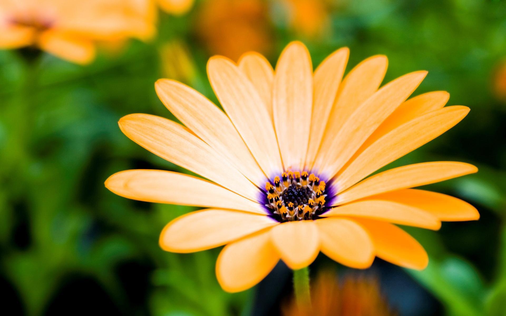 Flower wallpaper computer backgrounds.