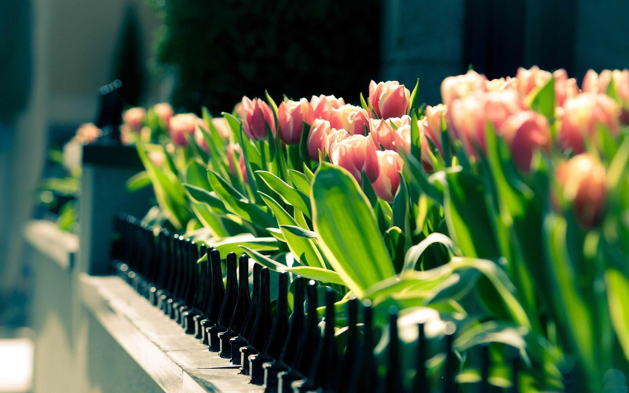 Spring landscape desktop wallpaper.