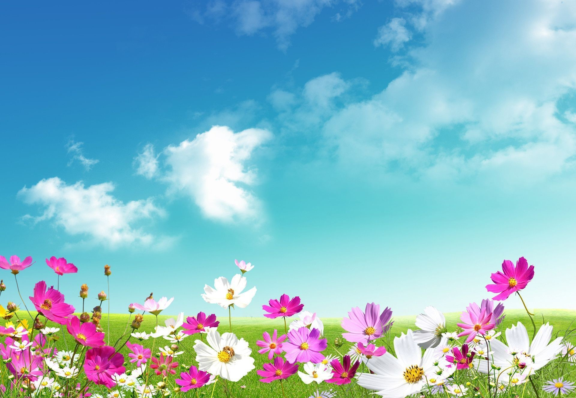 Free Computer Backgrounds For Spring