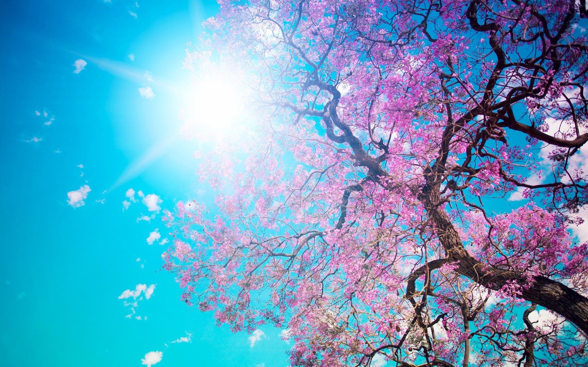 Spring Desktop Wallpaper HD Photos.