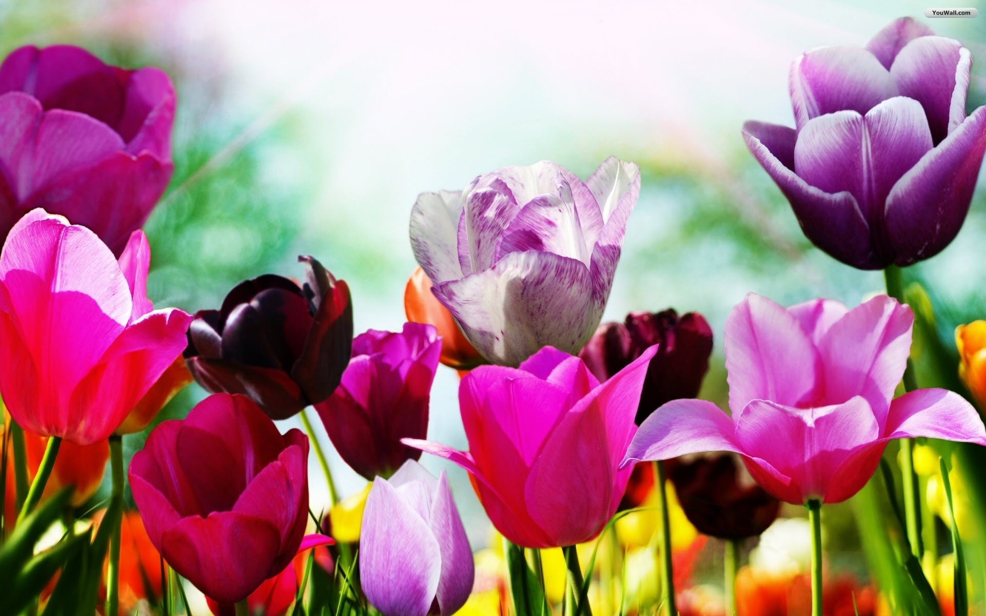 Free Desktop Wallpaper | Spring Wallpaper – wallpaper,wallpapers,free  wallpaper,photo,
