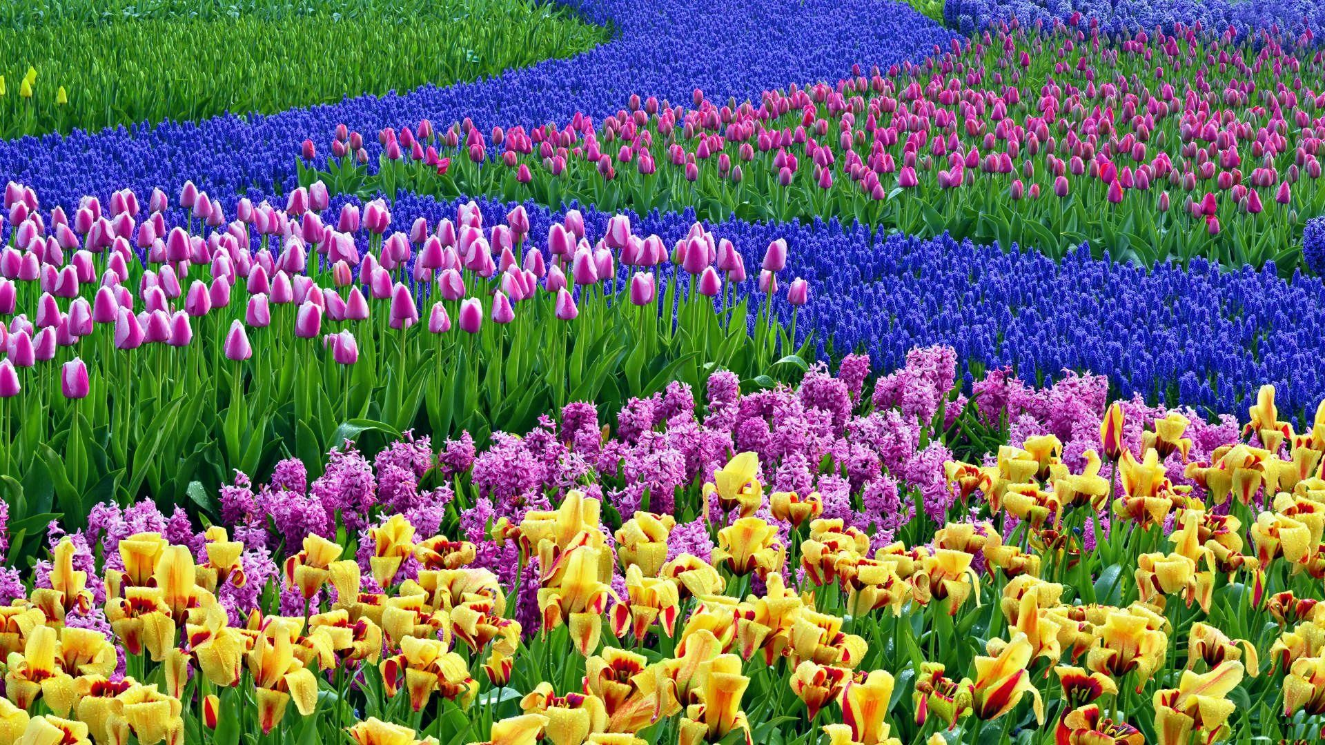 early-spring-flowers-wallpaper9-600×338