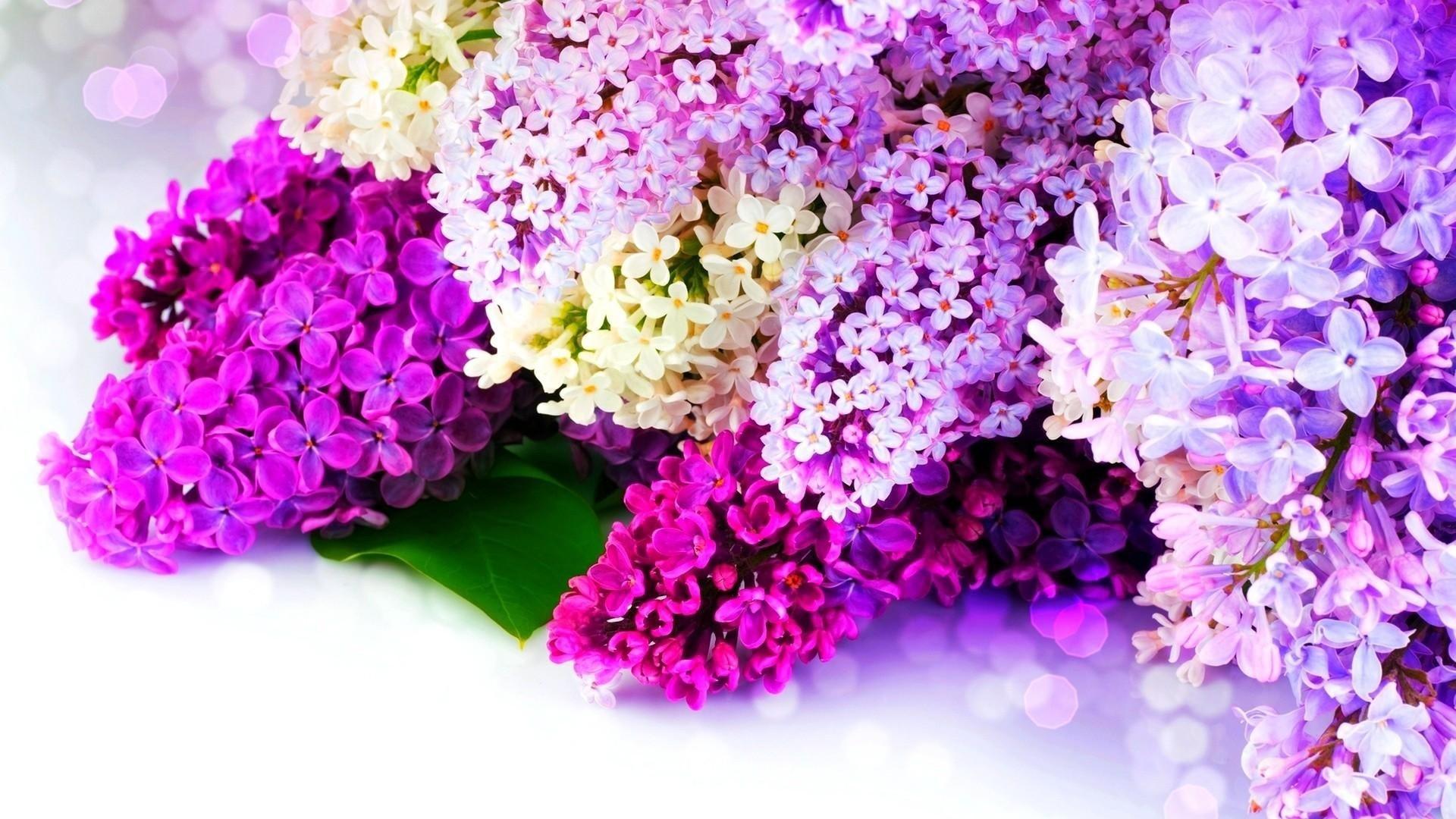 Image for Spring Wallpaper For Computer Desktop DF6
