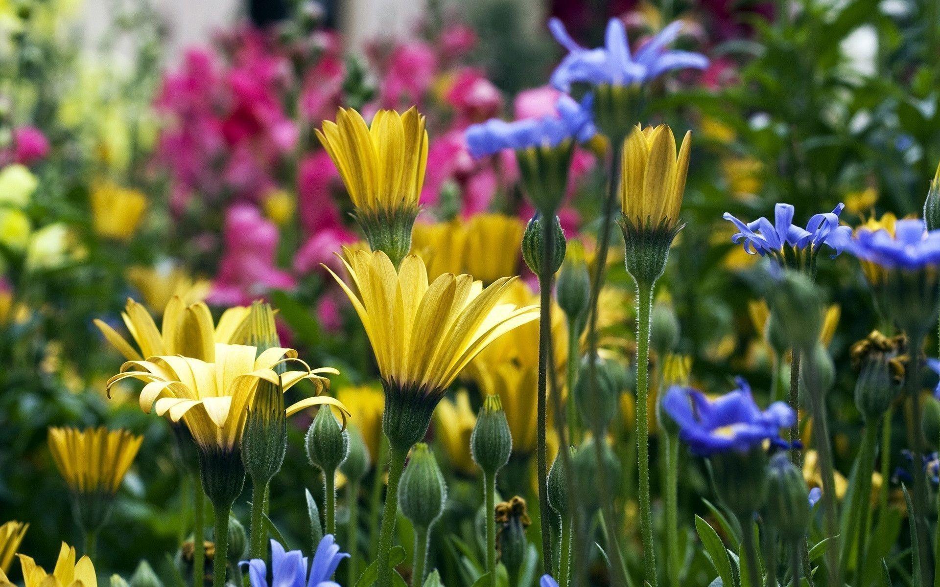 Flower meadow – Spring Wallpaper (22177477) – Fanpop