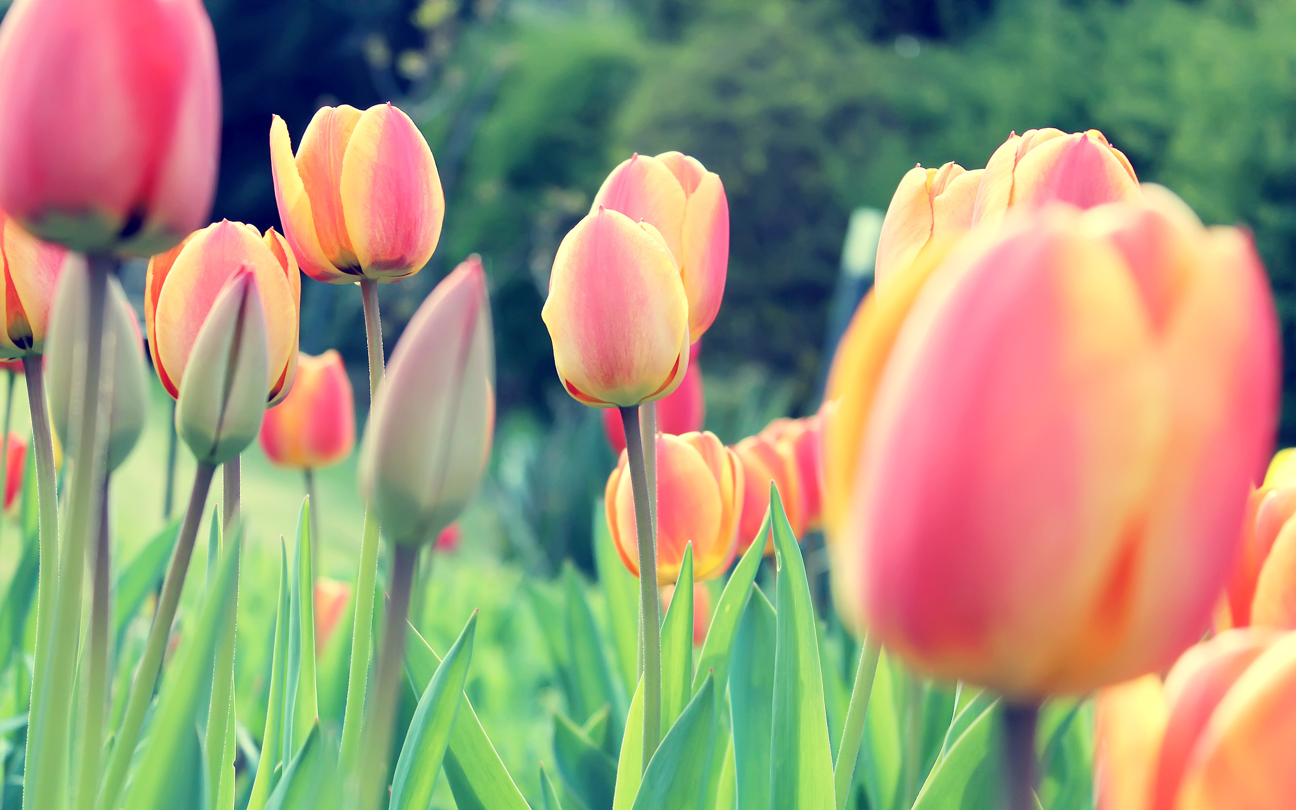 Spring is in the air! And we have the specials and tips to keep you