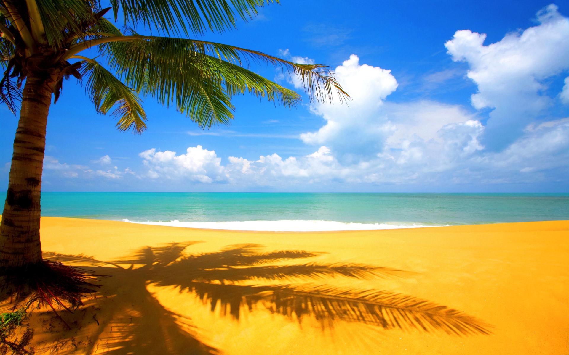 Wallpaper Of Beach Scenery: A Beautiful Shadow Of Palm Near Beach .