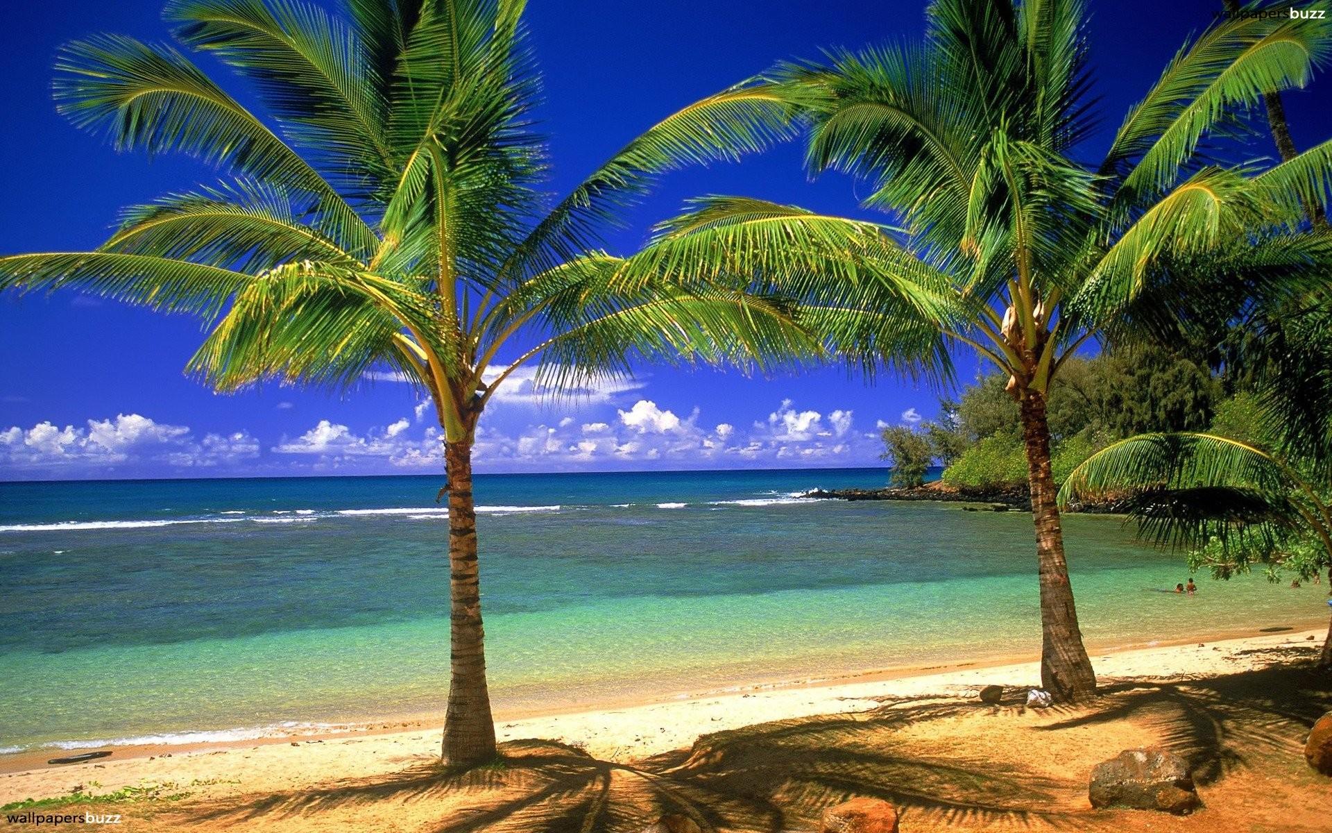 Two palms on a beach HD Wallpaper
