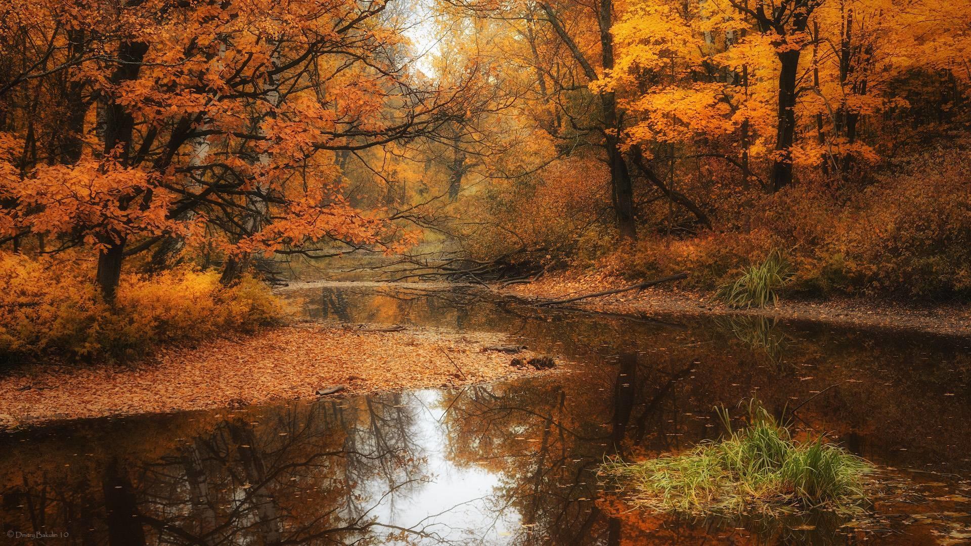 Fall Wallpaper Hd – Viewing Gallery