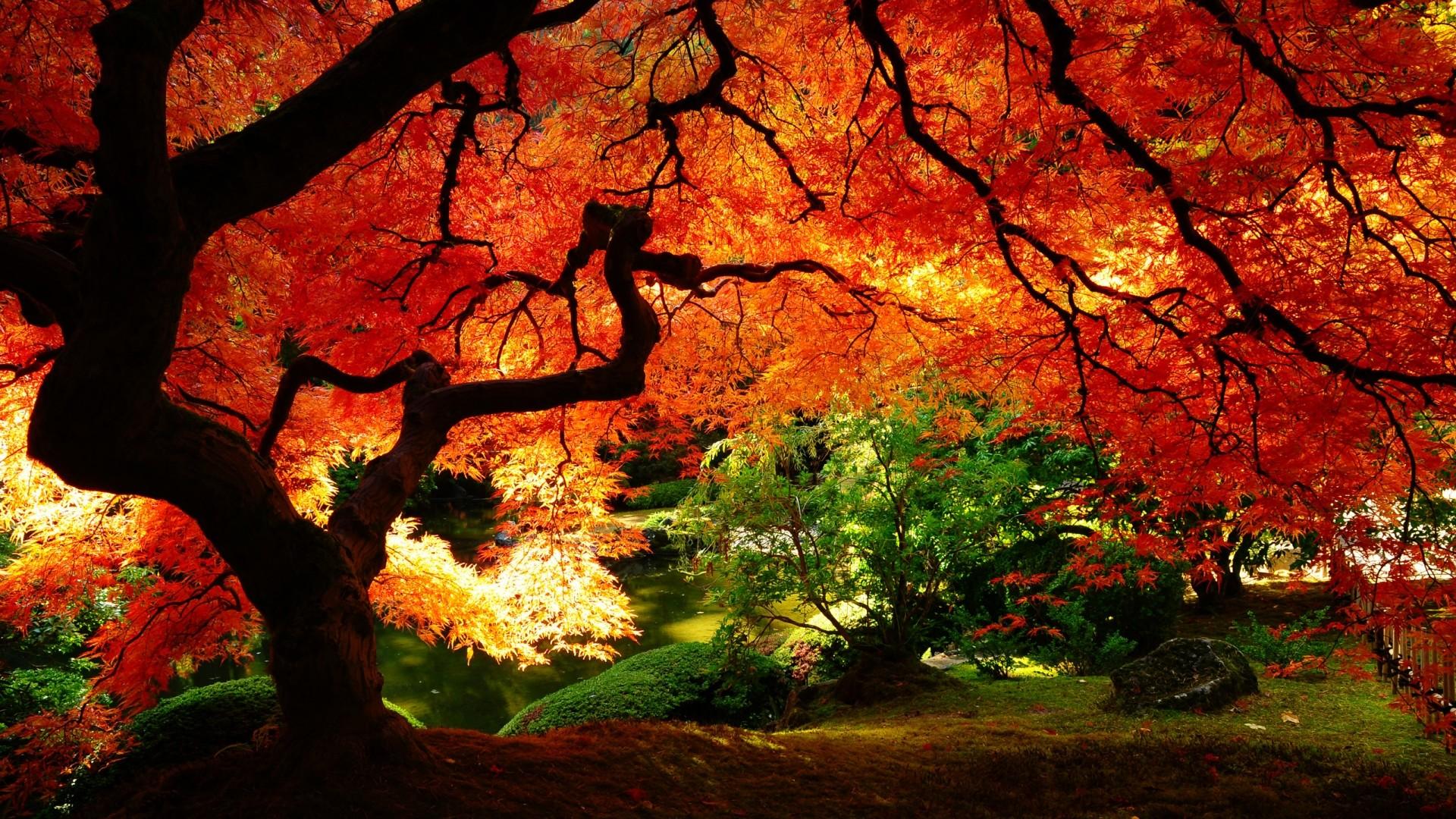 Free Autumn Wallpaper HD