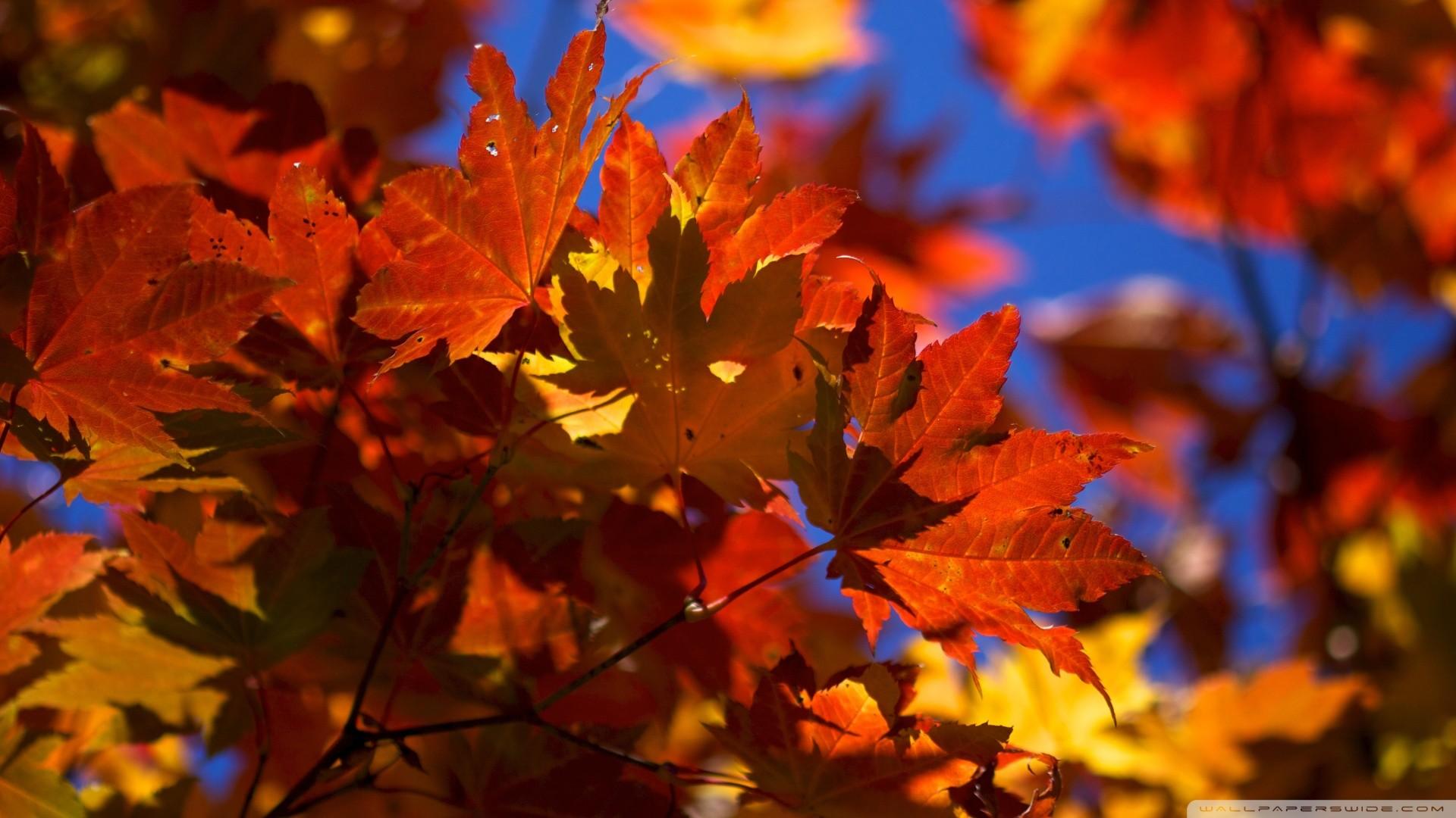 Autumn Leaves Falling Wallpaper