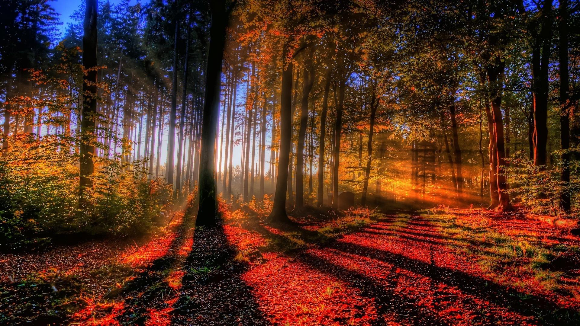 Sunlit autumn forest HD Wallpaper Sunlit …