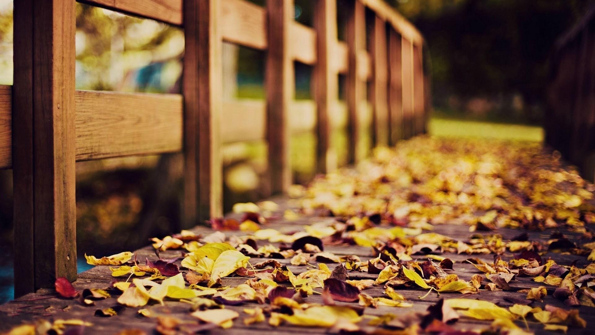 Photography – Fall Wallpaper