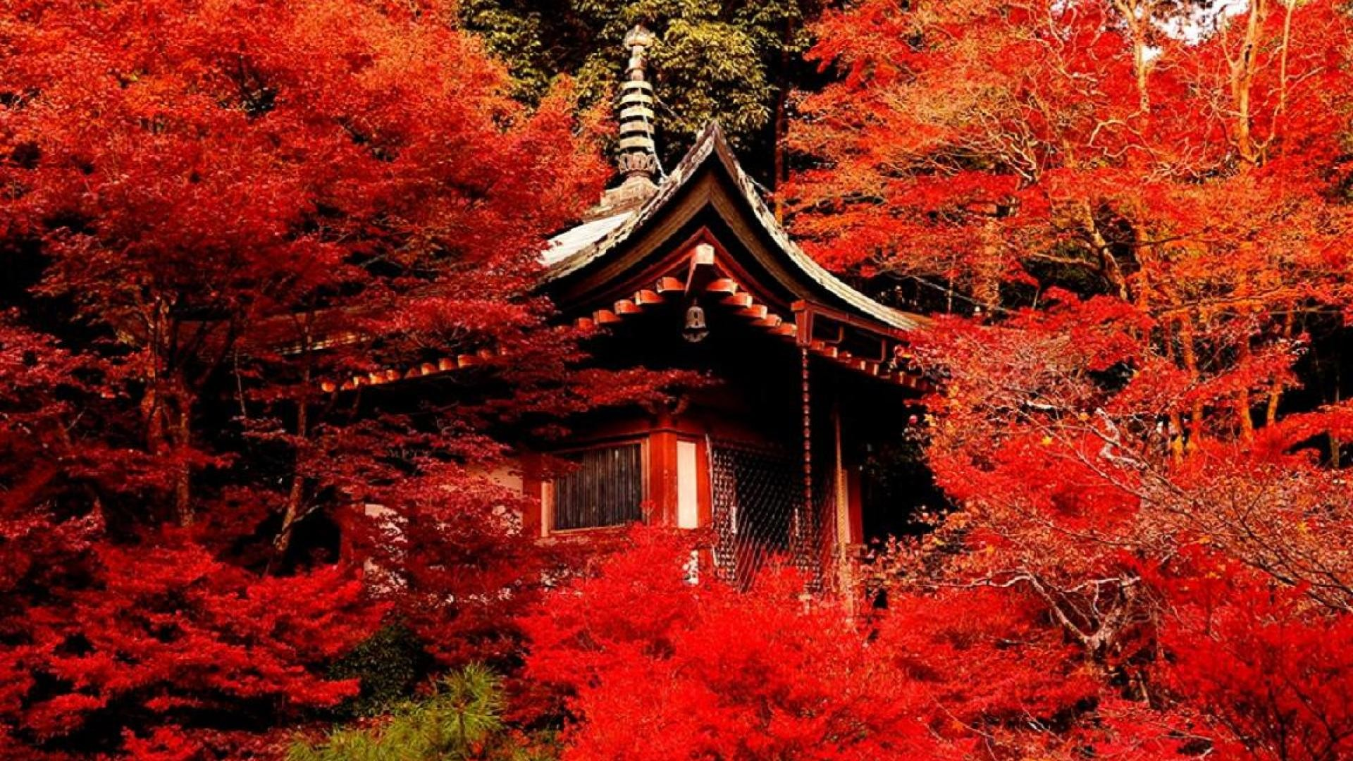 Download now full hd wallpaper kyoto autumn tea house in screen resolution  1920×1080.