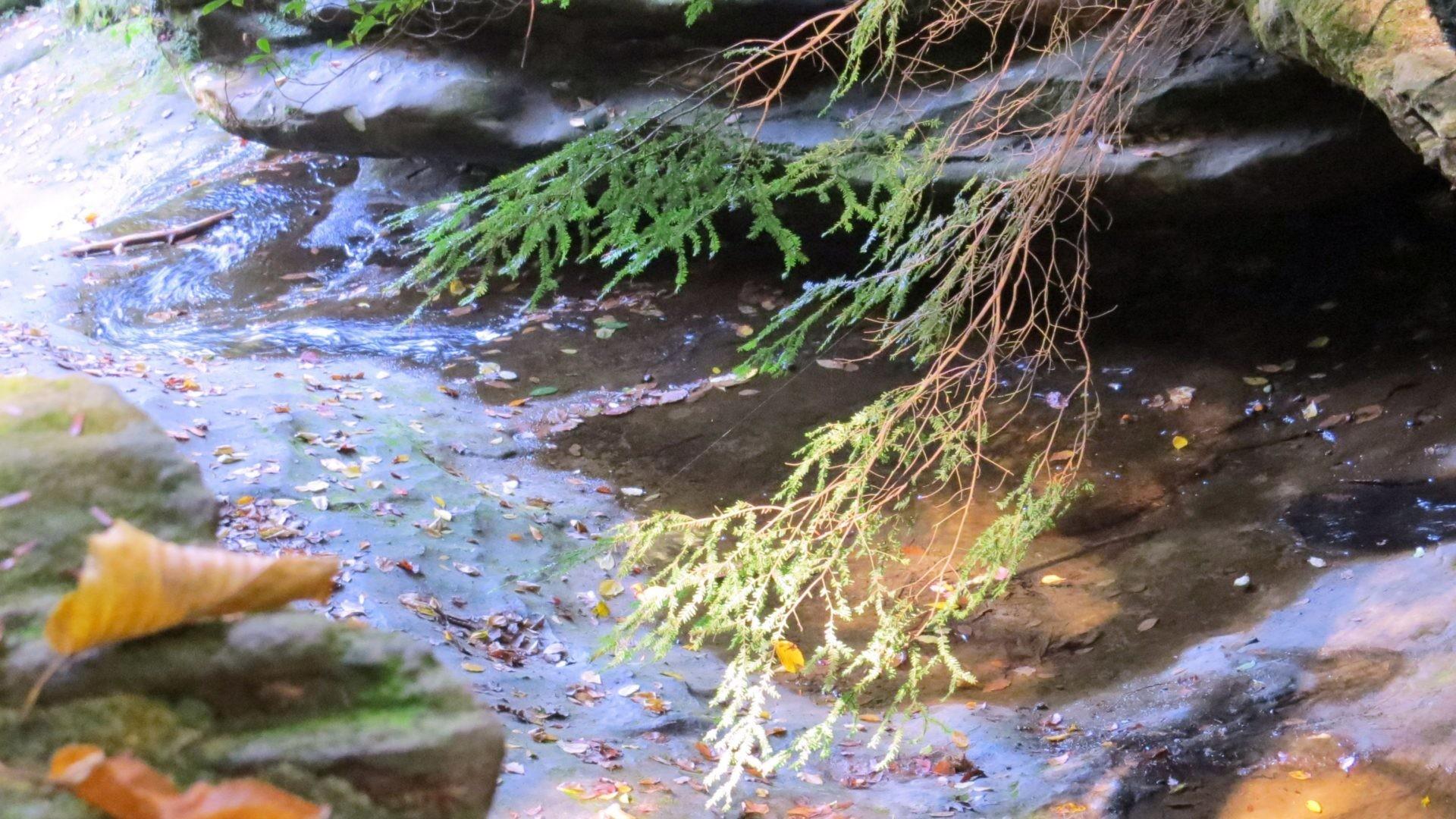 Floating Leaves HD desktop wallpaper Fullscreen Mobile