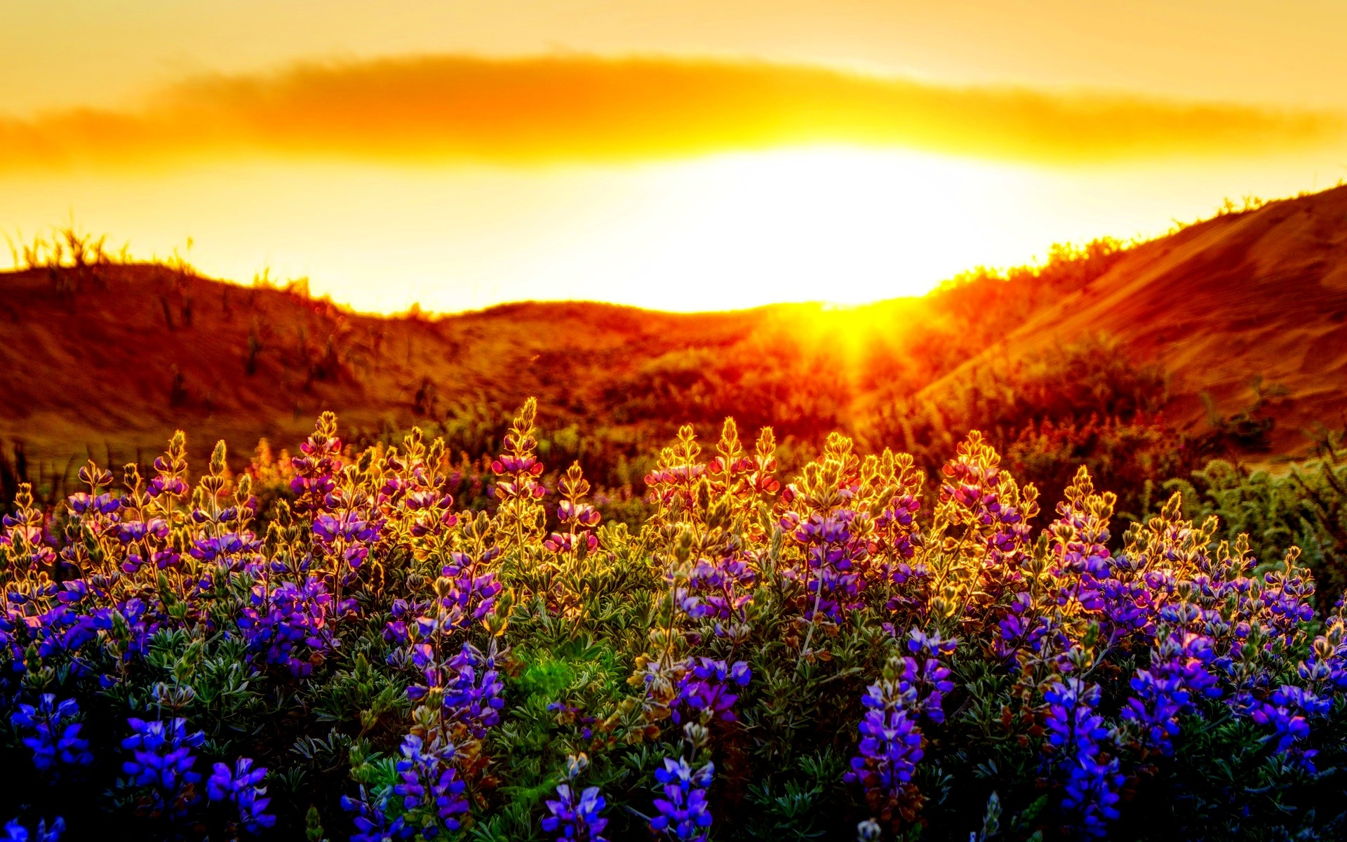 Spring Sunset Background (23 Wallpapers)