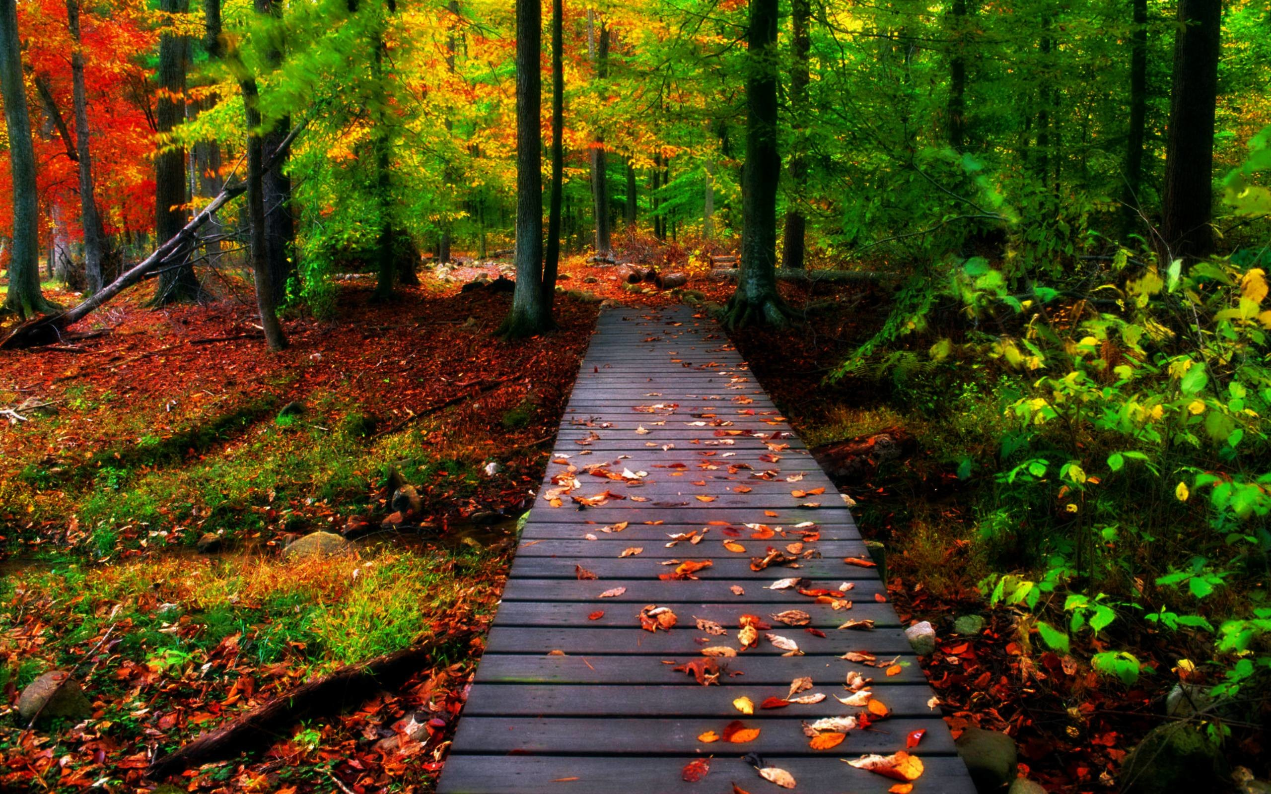 Fall Themed Backgrounds – Wallpaper Cave