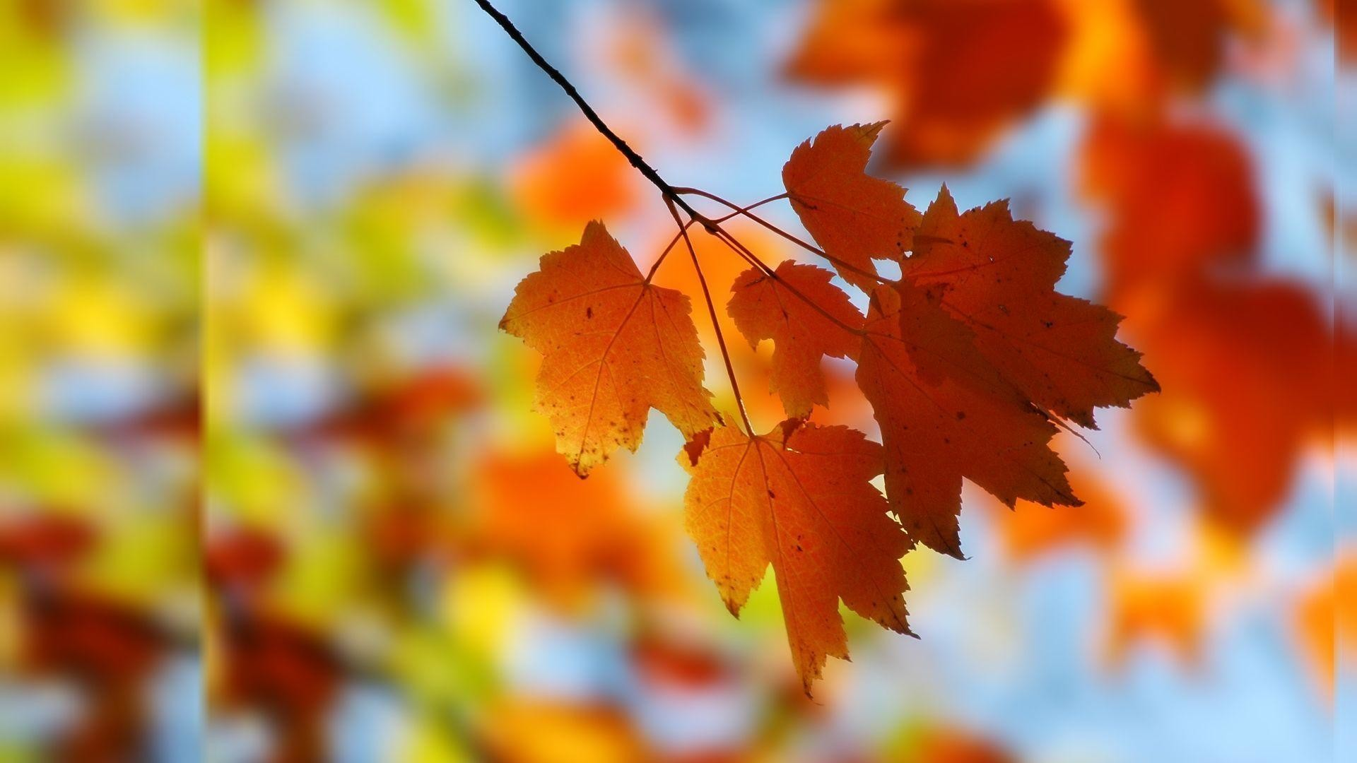 Fall Computer Backgrounds – Wallpaper Cave