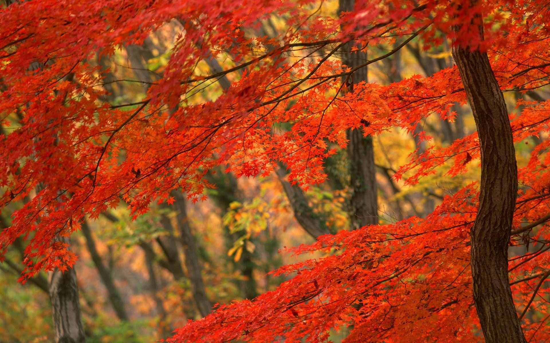 wallpaper.wiki-Computer-Autumn-leaves-pictures-PIC-WPD007027