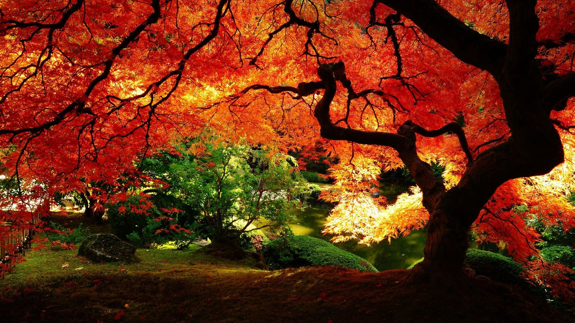 Beautiful Autumn Trees Wallpapers Images & Pictures – Becuo