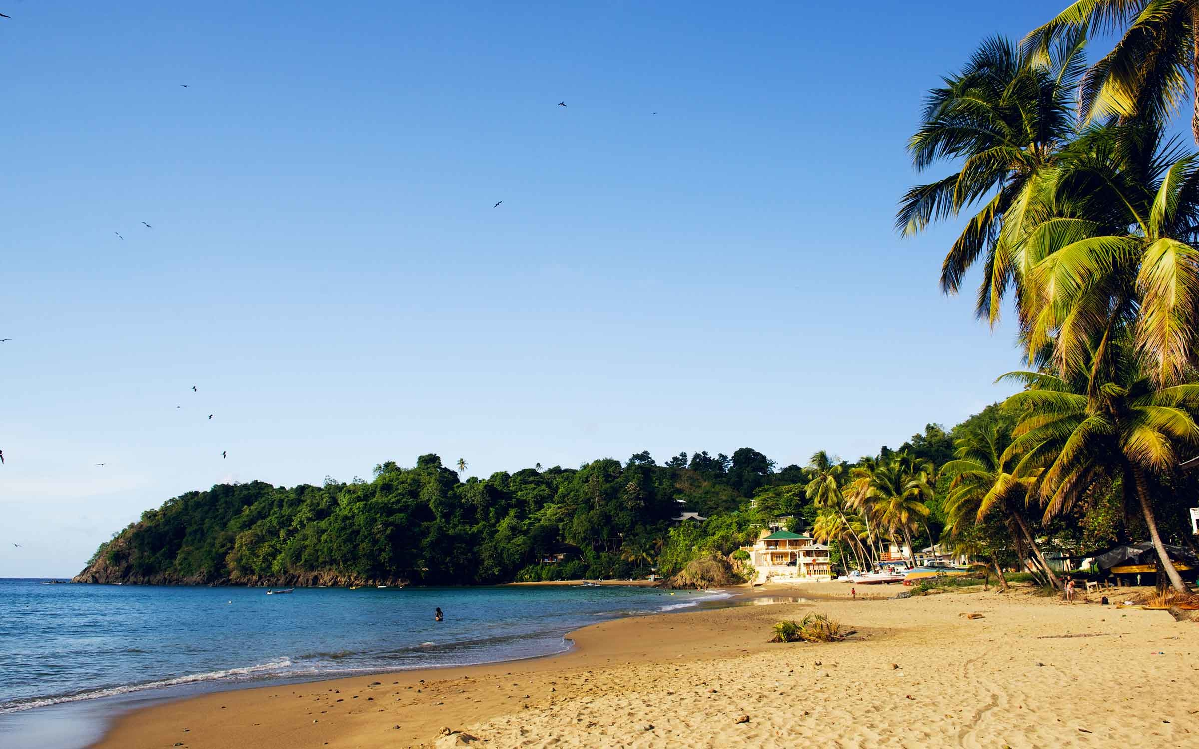 Castara Beach Tobago Caribbean Wallpaper by Patrick Bennett