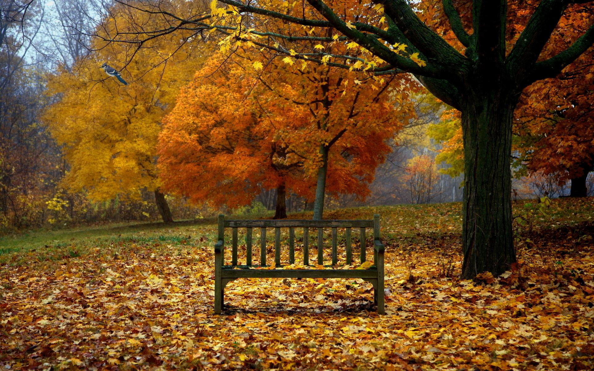 Fall Scenes For Desktop Background